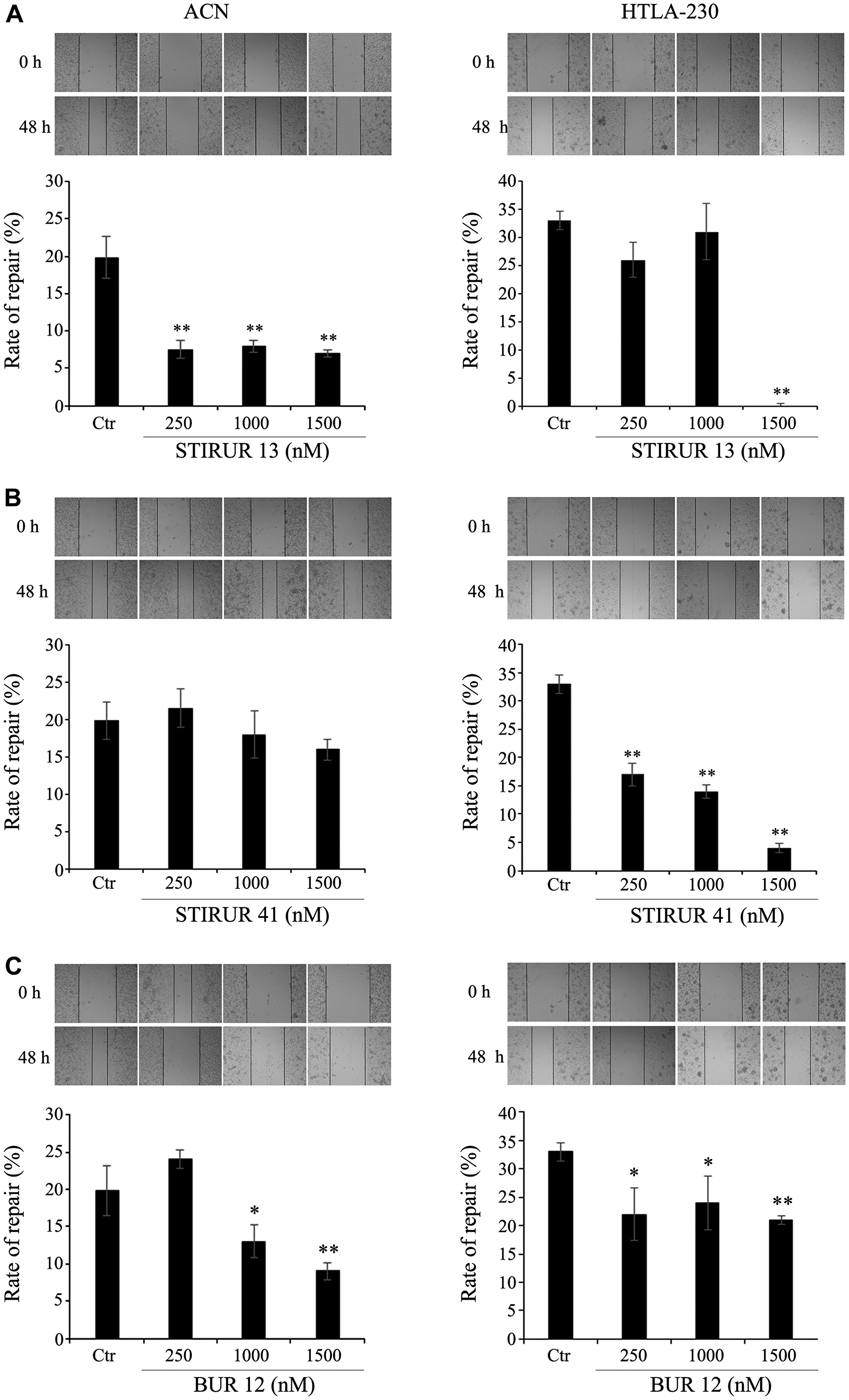 STIRUR 13, STIRUR 41 and BUR 12 affect the scratch repair ability of ACN and HTLA-230 cells.