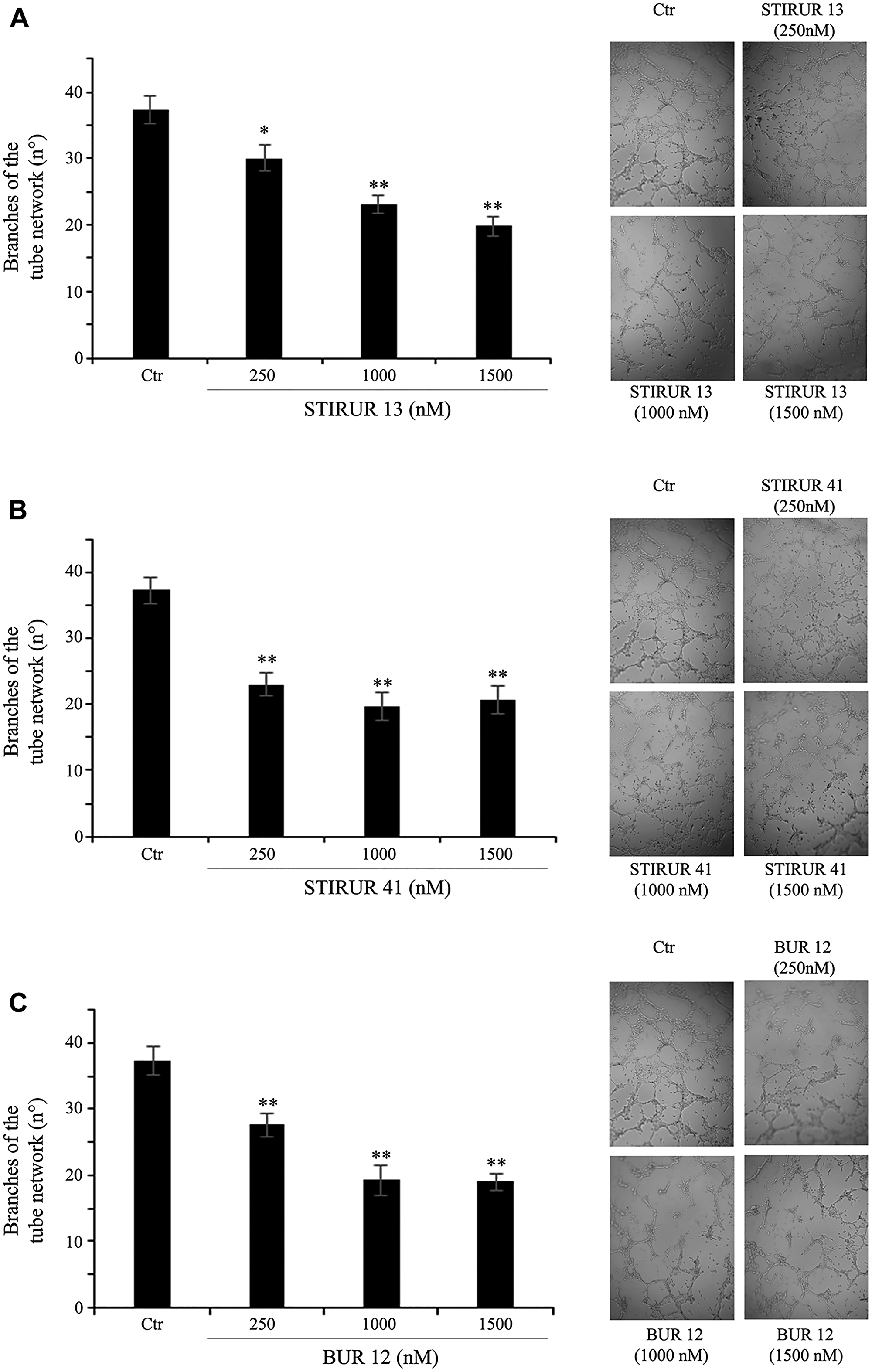 STIRUR 13, STIRUR 41 and BUR 12 reduce the ability of HTLA-230 cells to form capillary-like structures.