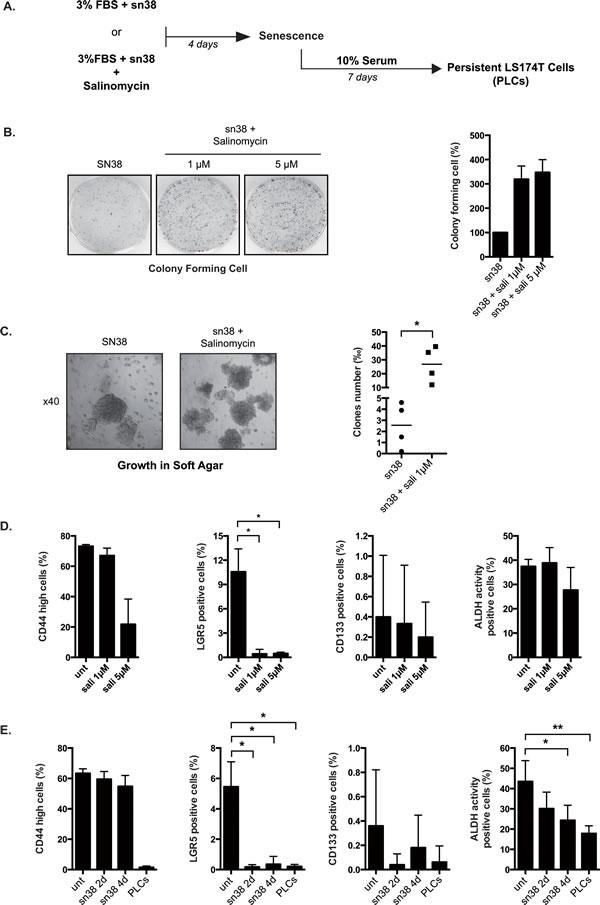 Salinomycin enhances emergence and growth in soft agar.