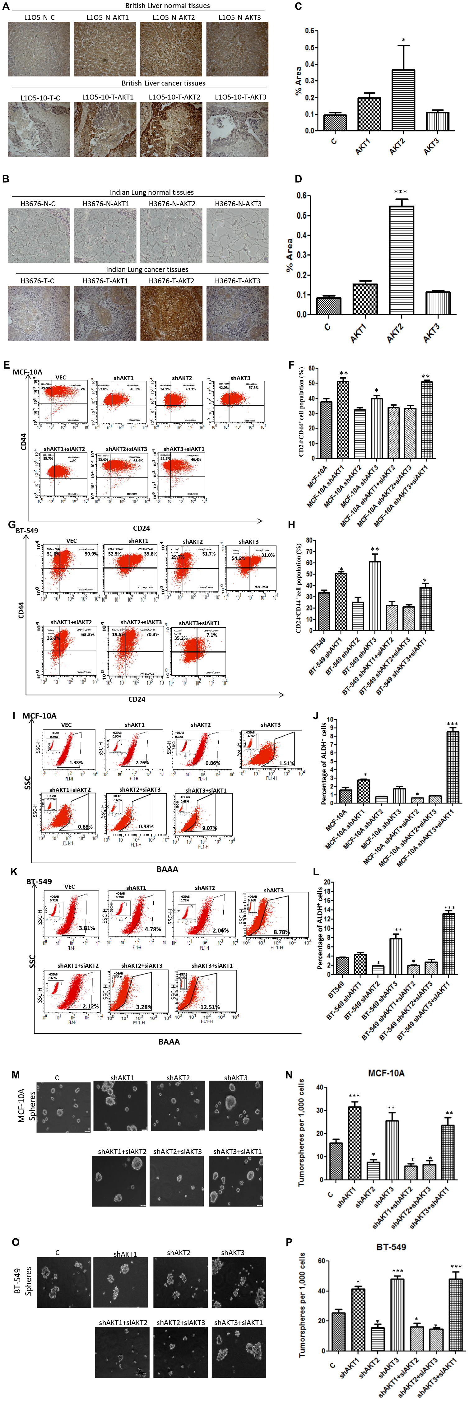 AKT2 promotes cancer stem cells and contributes to metastasis.