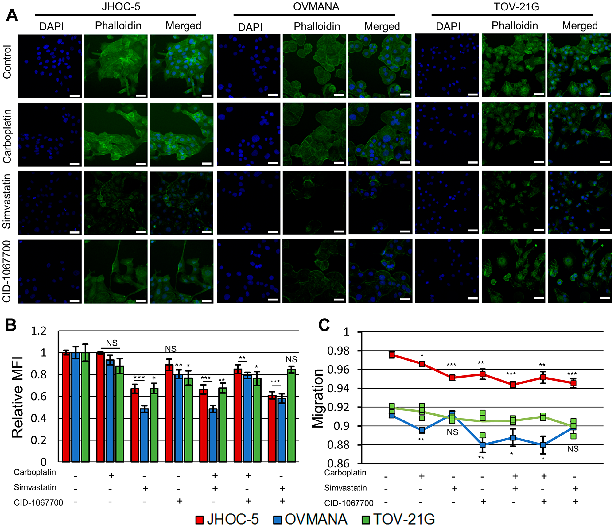 Effect of treatments upon cytoskeletal integrity and migration in JHOC-5, OVMANA and TOV-21G cell lines.