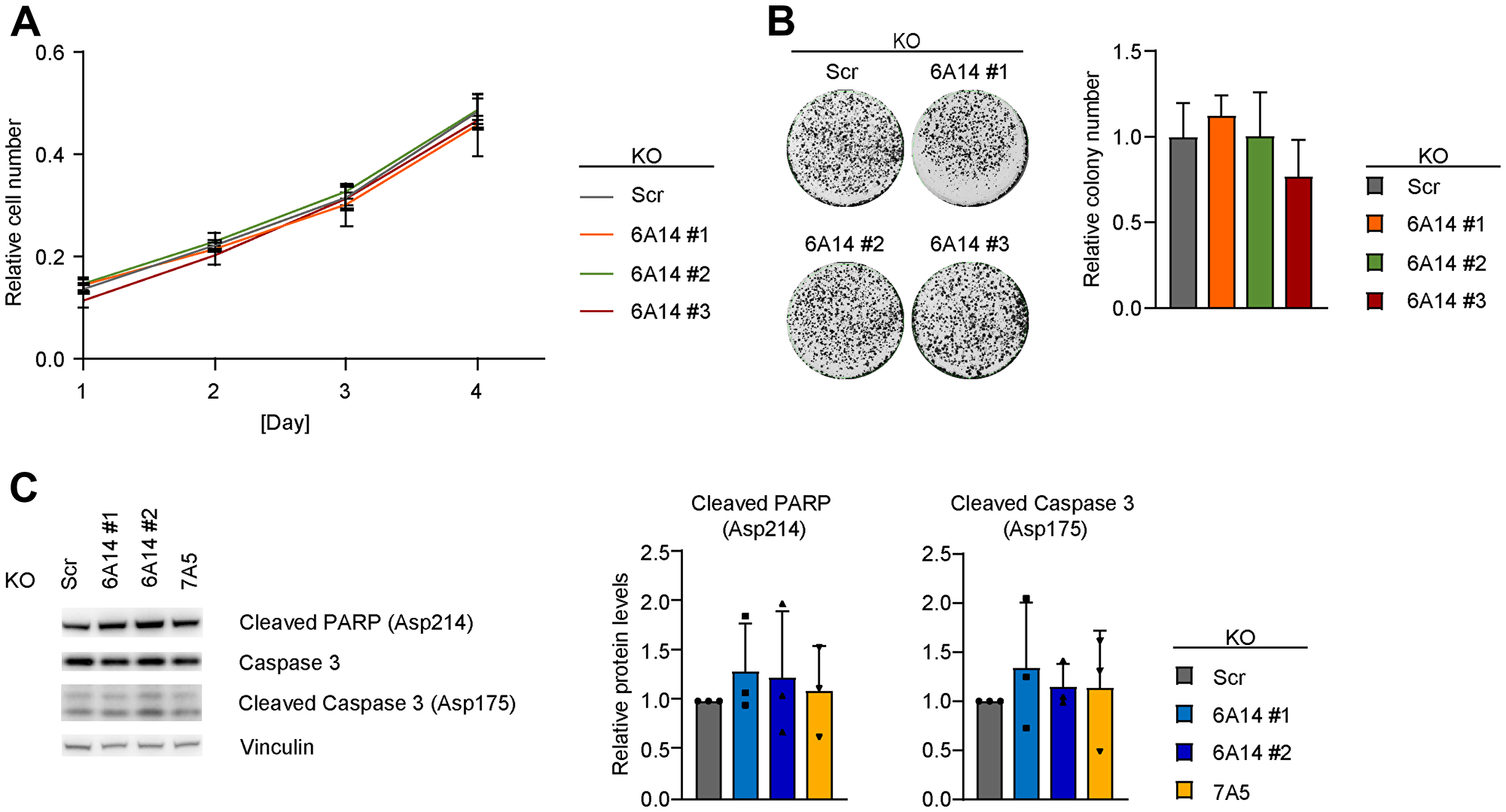 Genetic inhibition of SLC6A14 does not have a major impact on cell viability.