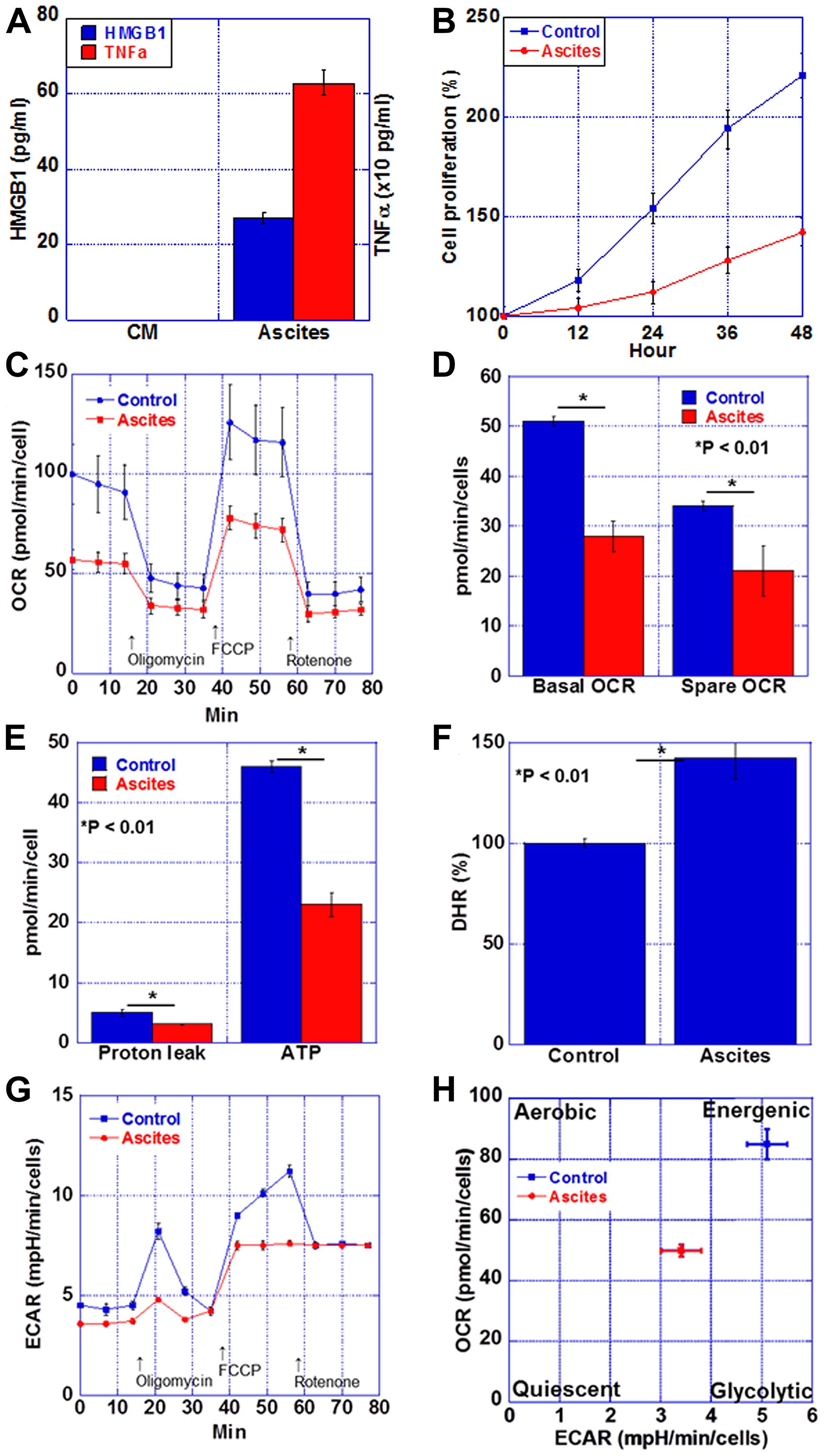 Energy metabolism in the myocardium of CT26-inoculated BALB/c mice.