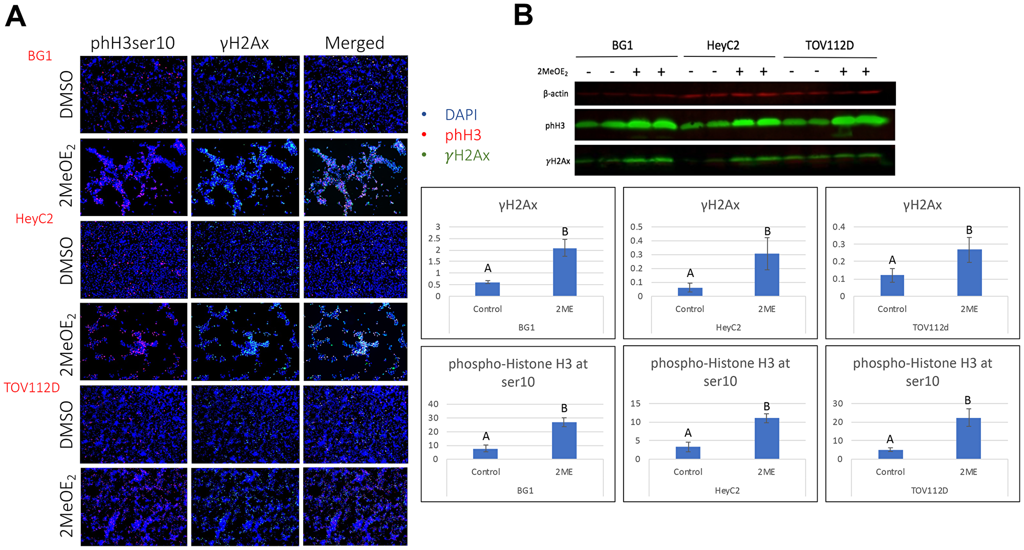 2MeOE2 induced histone modifications in human ovarian cancer cells.