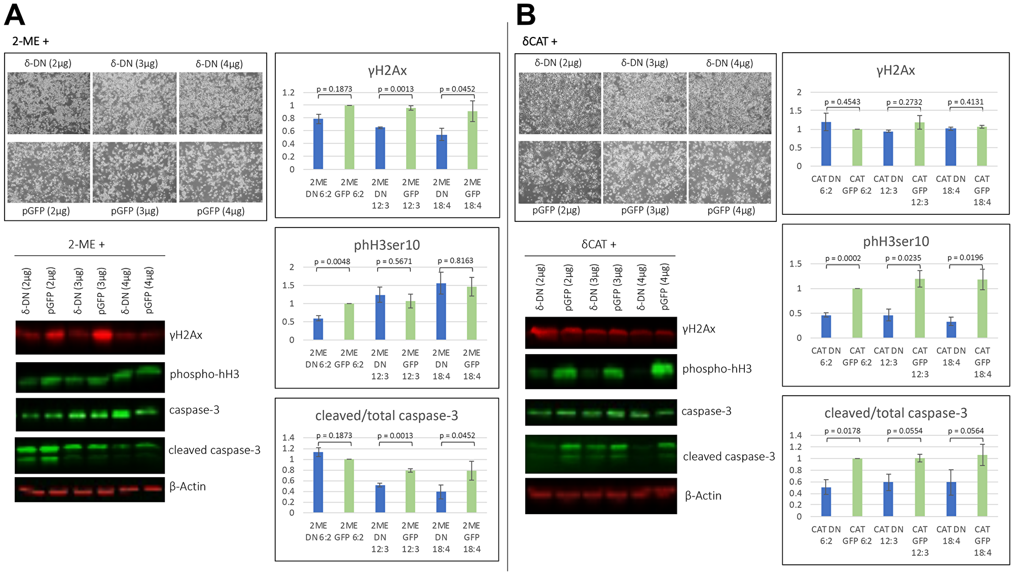 2MeOE2 effects are in part dependent on PKCδ.