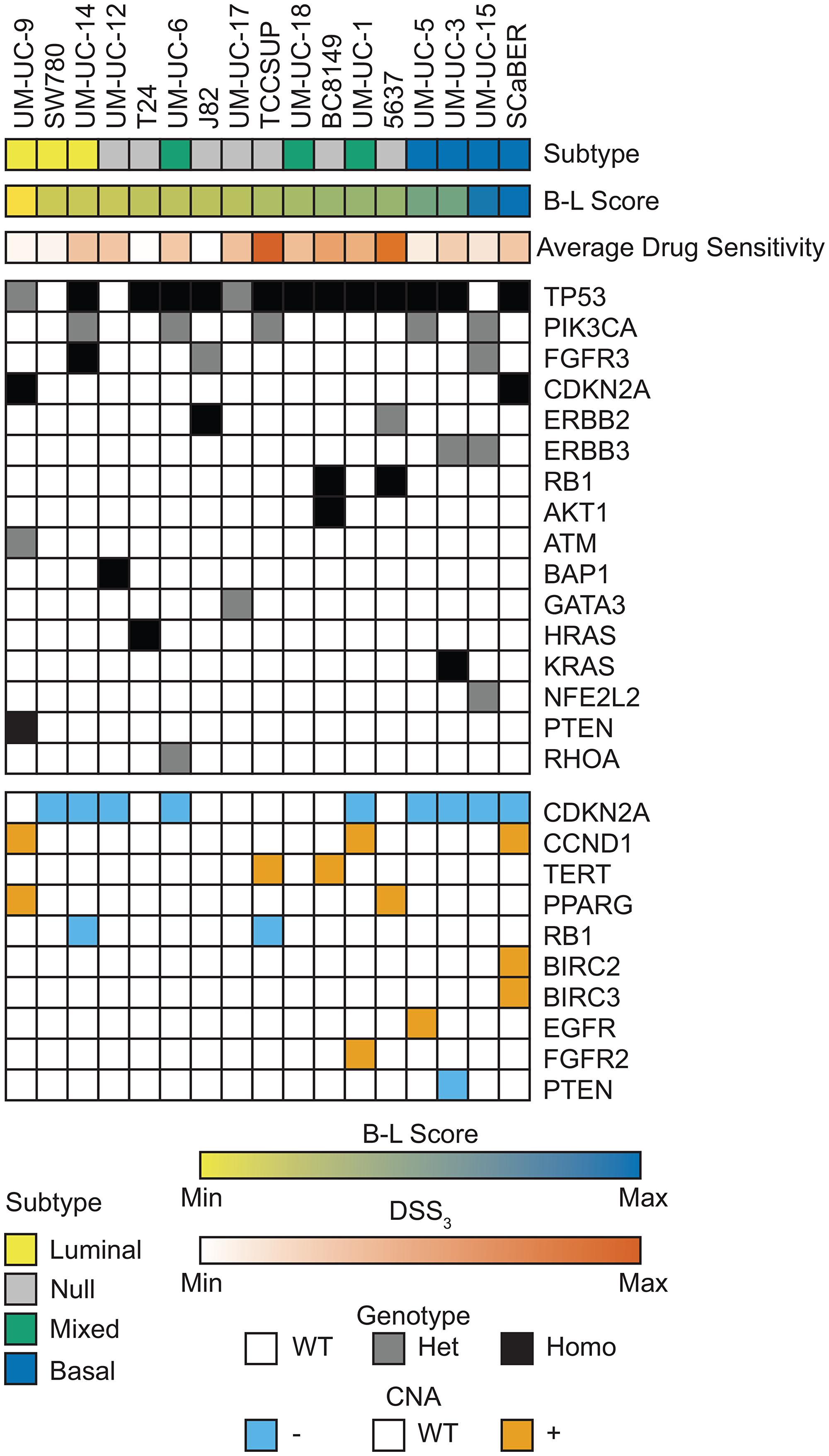 Genomic landscape of bladder cell lines.