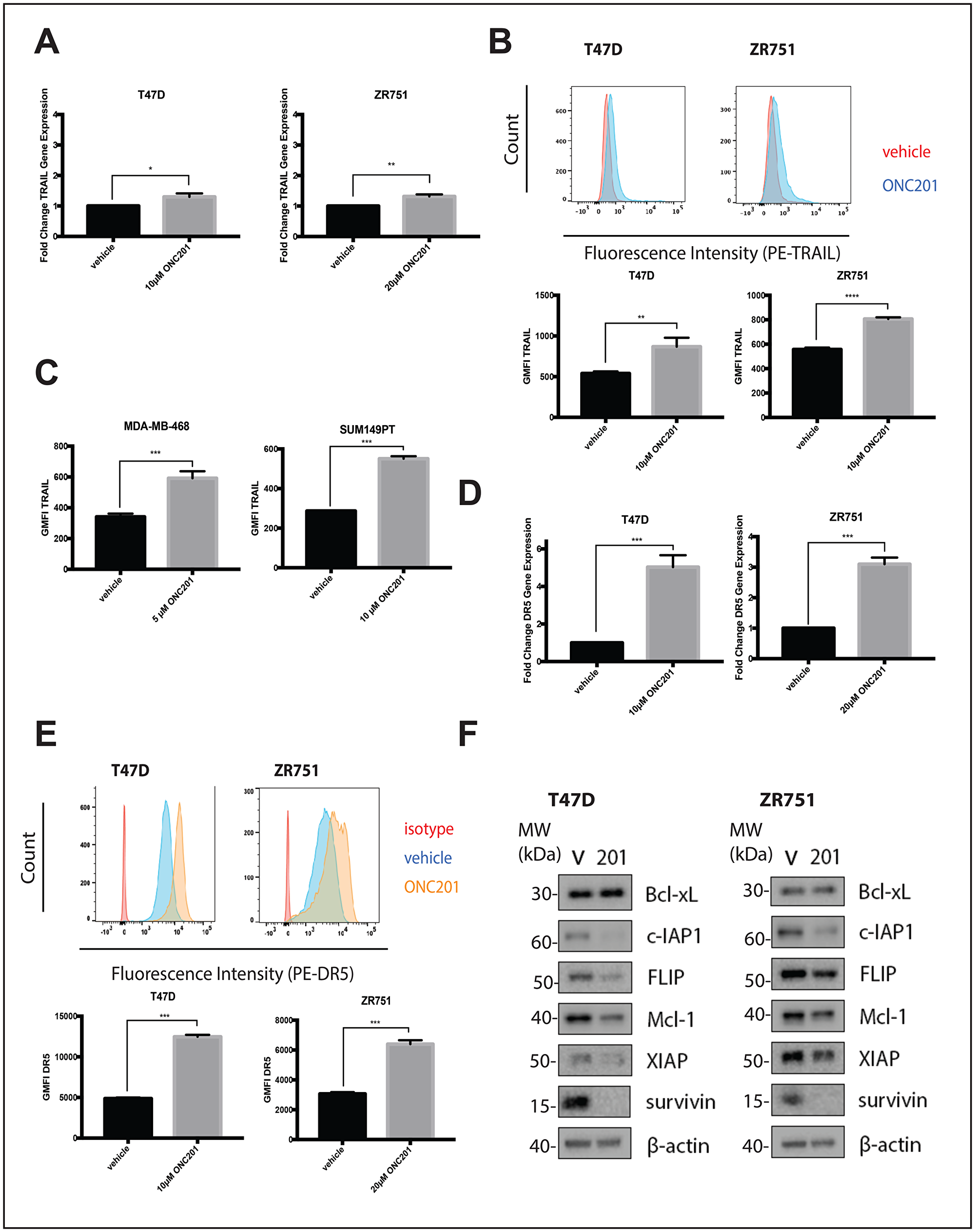 ONC201 treated T47D and ZR751 non-TNBC cells increase TRAIL expression and are primed to undergo TRAIL-dependent apoptosis.