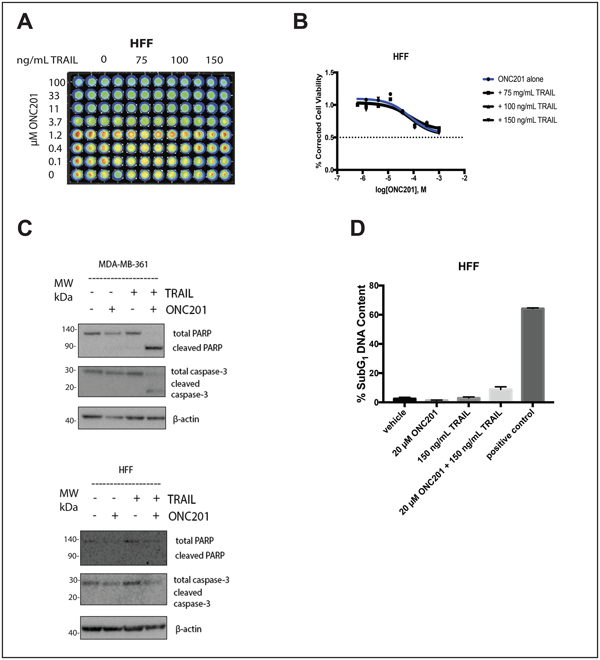 Addition of rhTRAIL does not convert the response to the compound in normal fibroblasts from anti-proliferative to apoptotic.