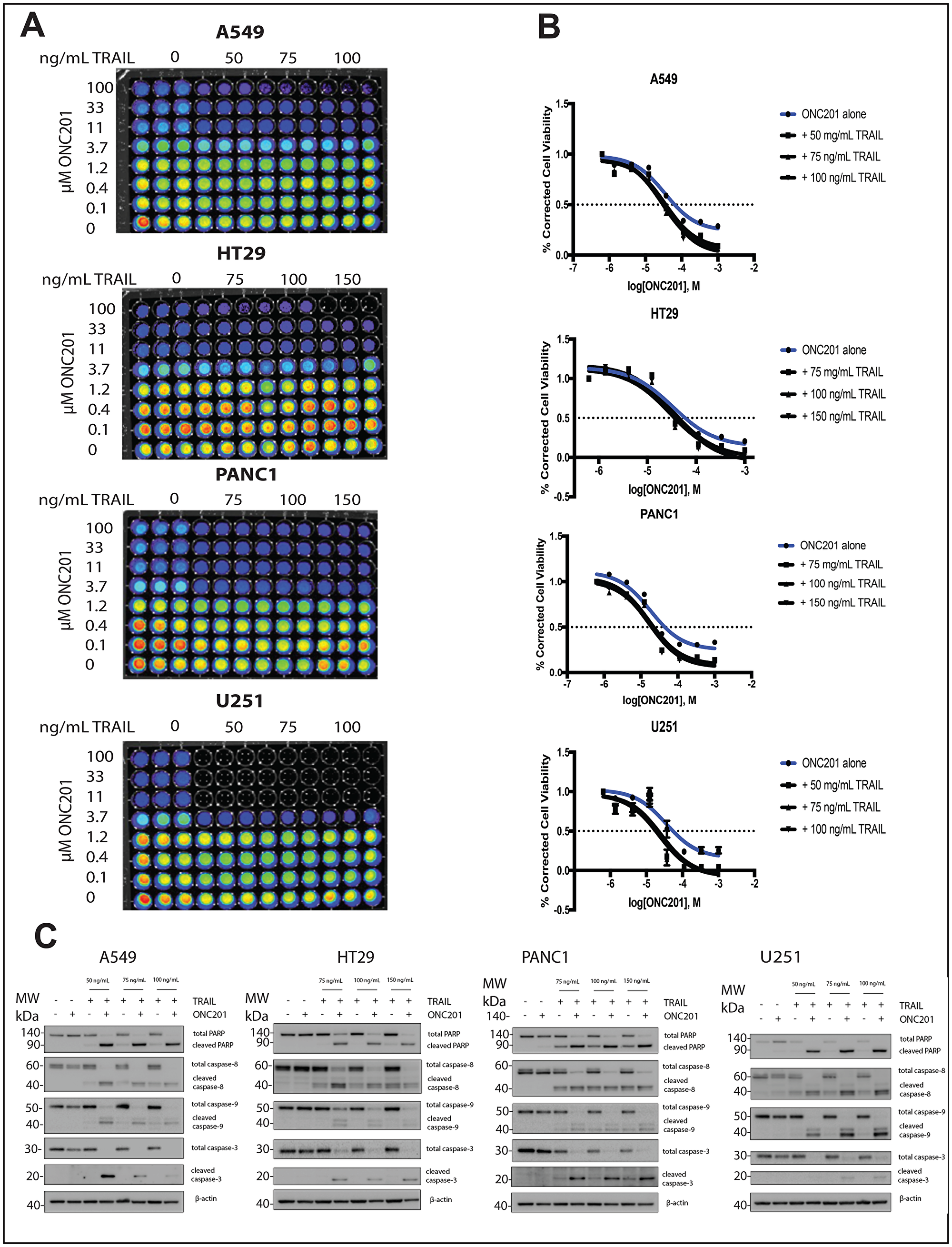 Addition of rhTRAIL converts the response of brain, pancreatic, lung, and colon cancer cells to ONC201 from anti-proliferative to pro-apoptotic.