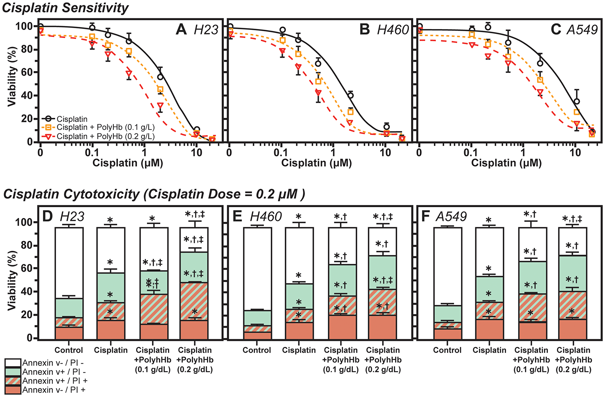 Effects of Cisplatin and PolyHb on cell viability and cytotoxicity.