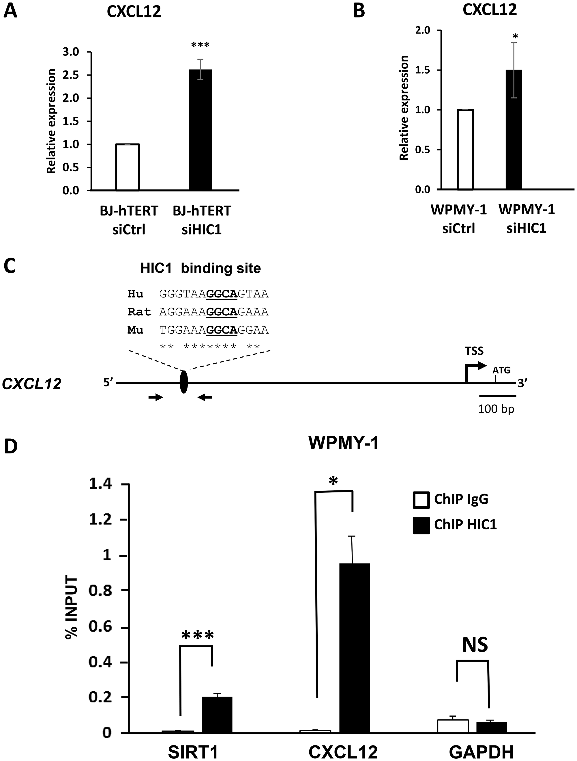 CXCL12/SDF1 is a direct target gene of HIC1 in the myofibroblastic cell line WPMY-1.