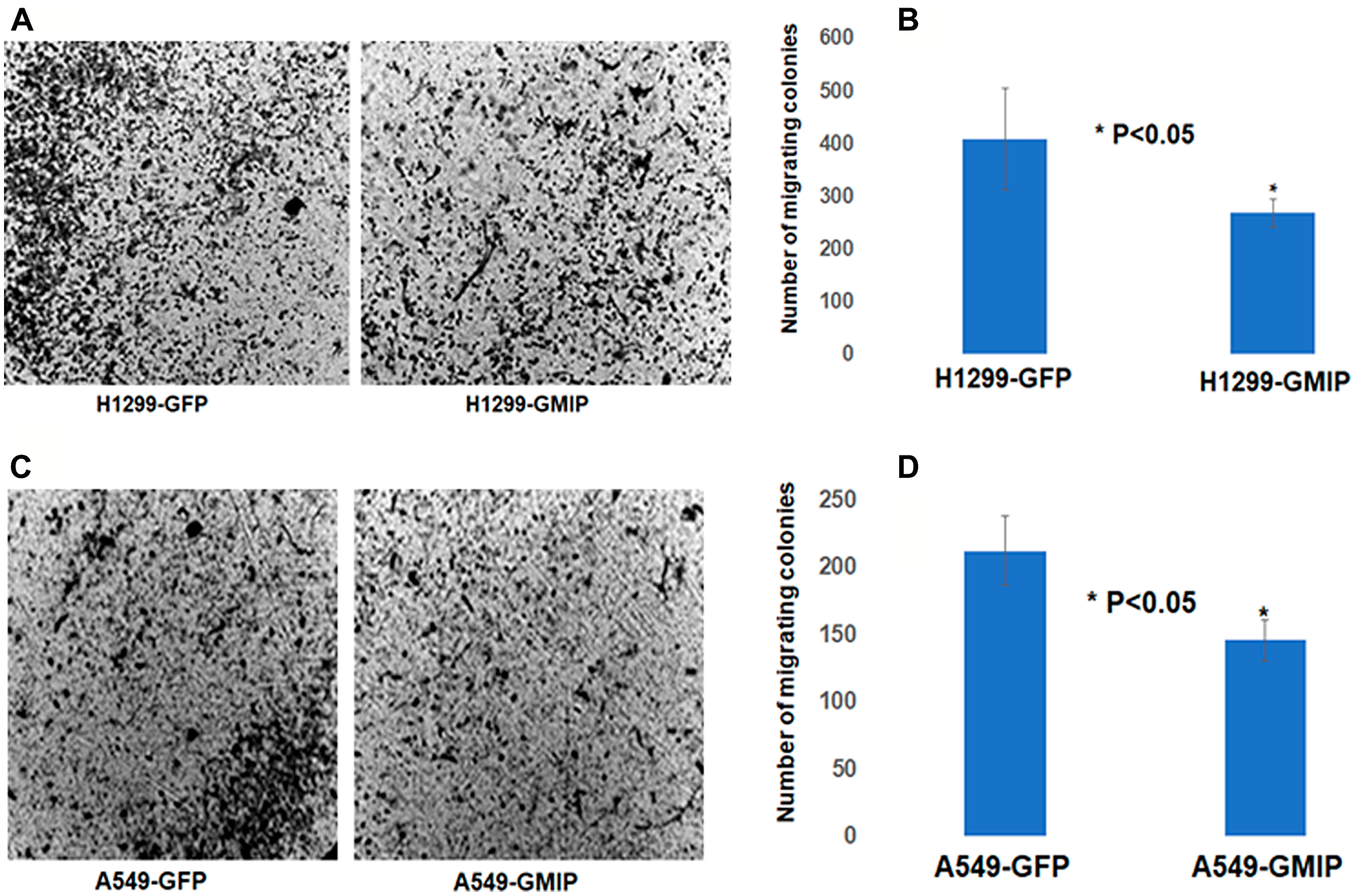 The BD BioCoatTM MatrigelTM Invasion Chamber was used to assess cell invasion/migration of H1299 and A549 cells transfected with GFP or GFP-GMIP plasmid.