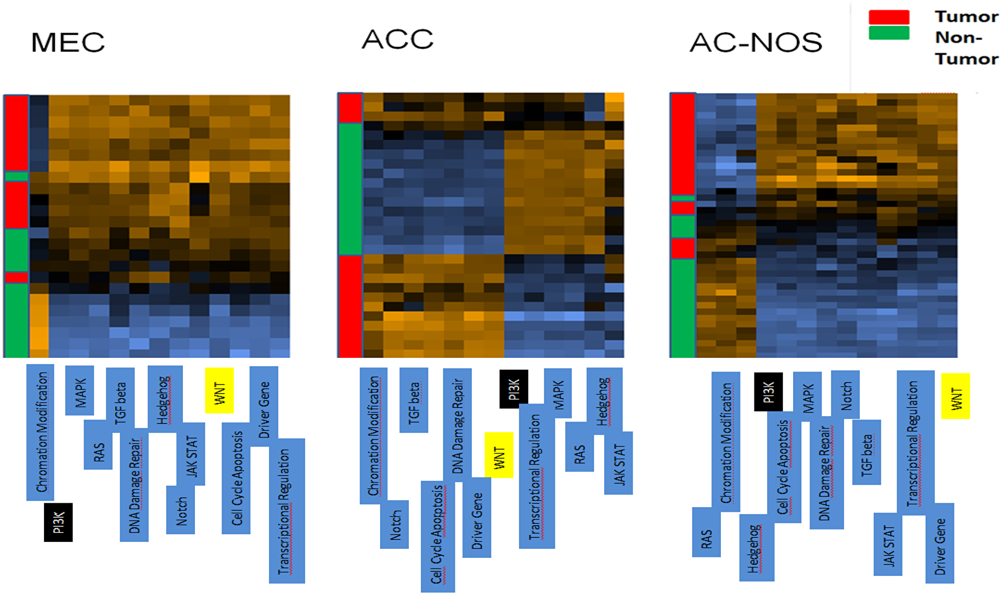 Cluster analysis of patient tumor samples and corresponding non-tumor of each tumor entity (MEC, ACC, AC-NOS).