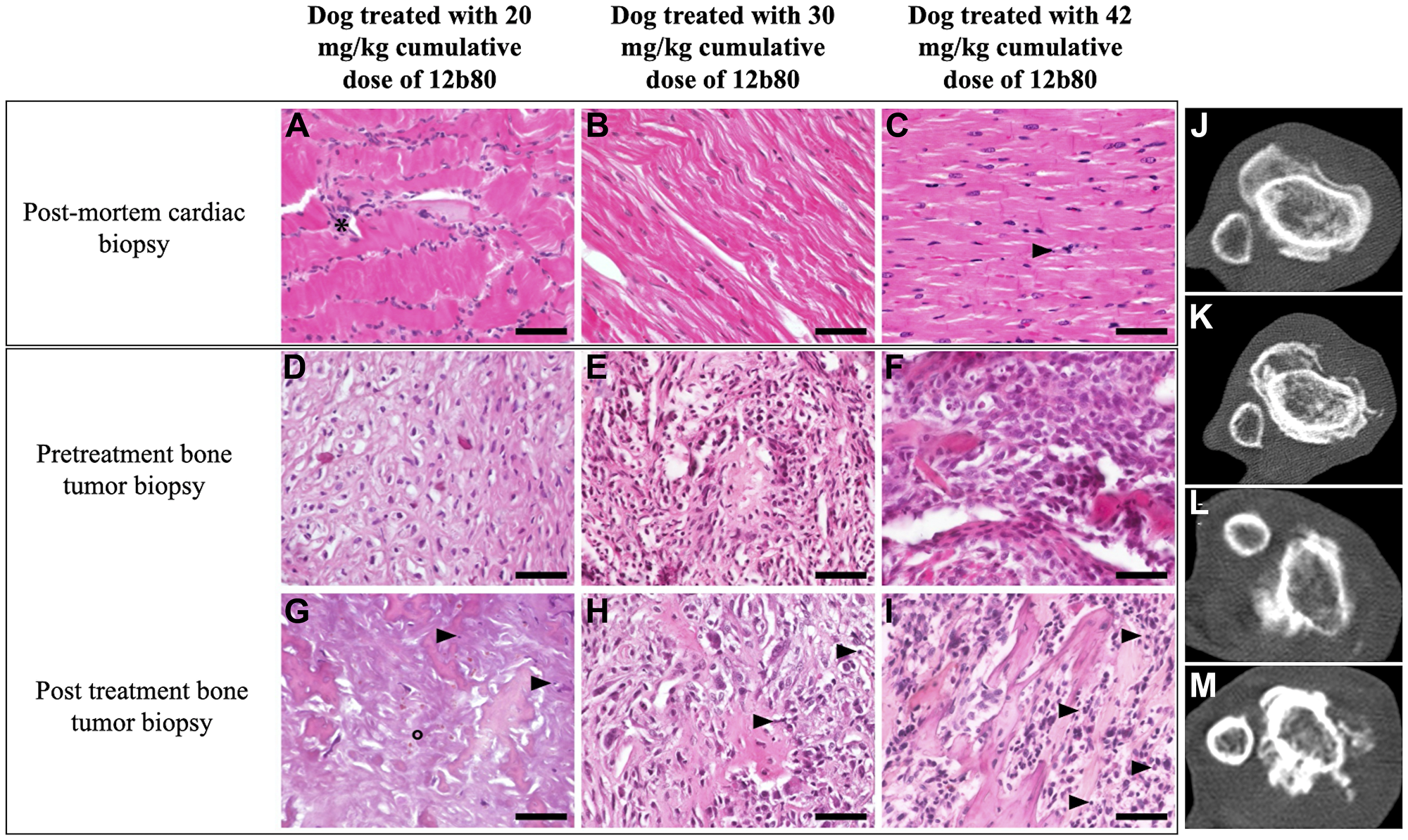 12b80 cardiac toxicity and antitumor activity in dogs.