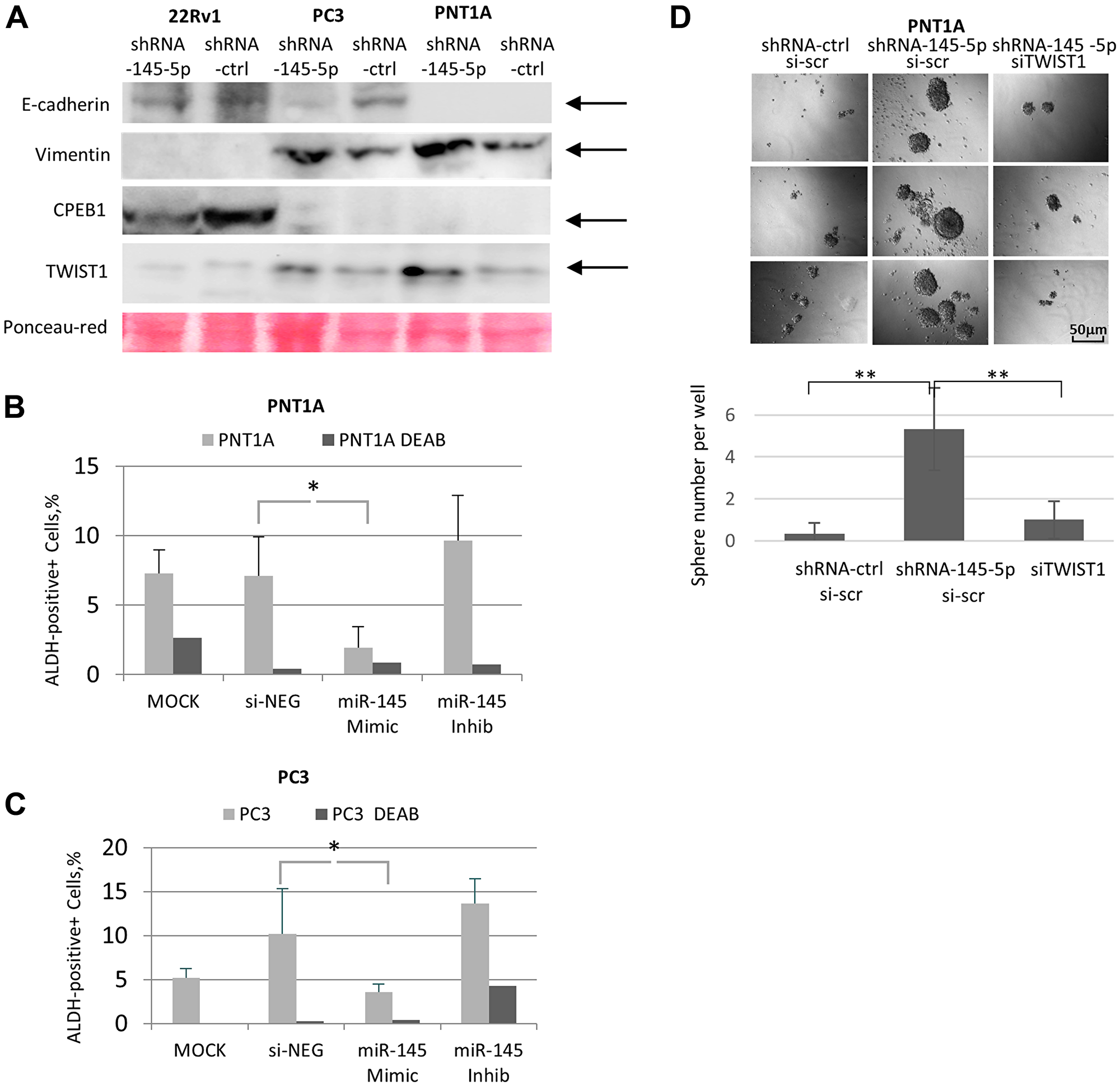 Impact of miR-145-5p on TWIST1, EMT, and self-renewal properties in prostate cell lines.