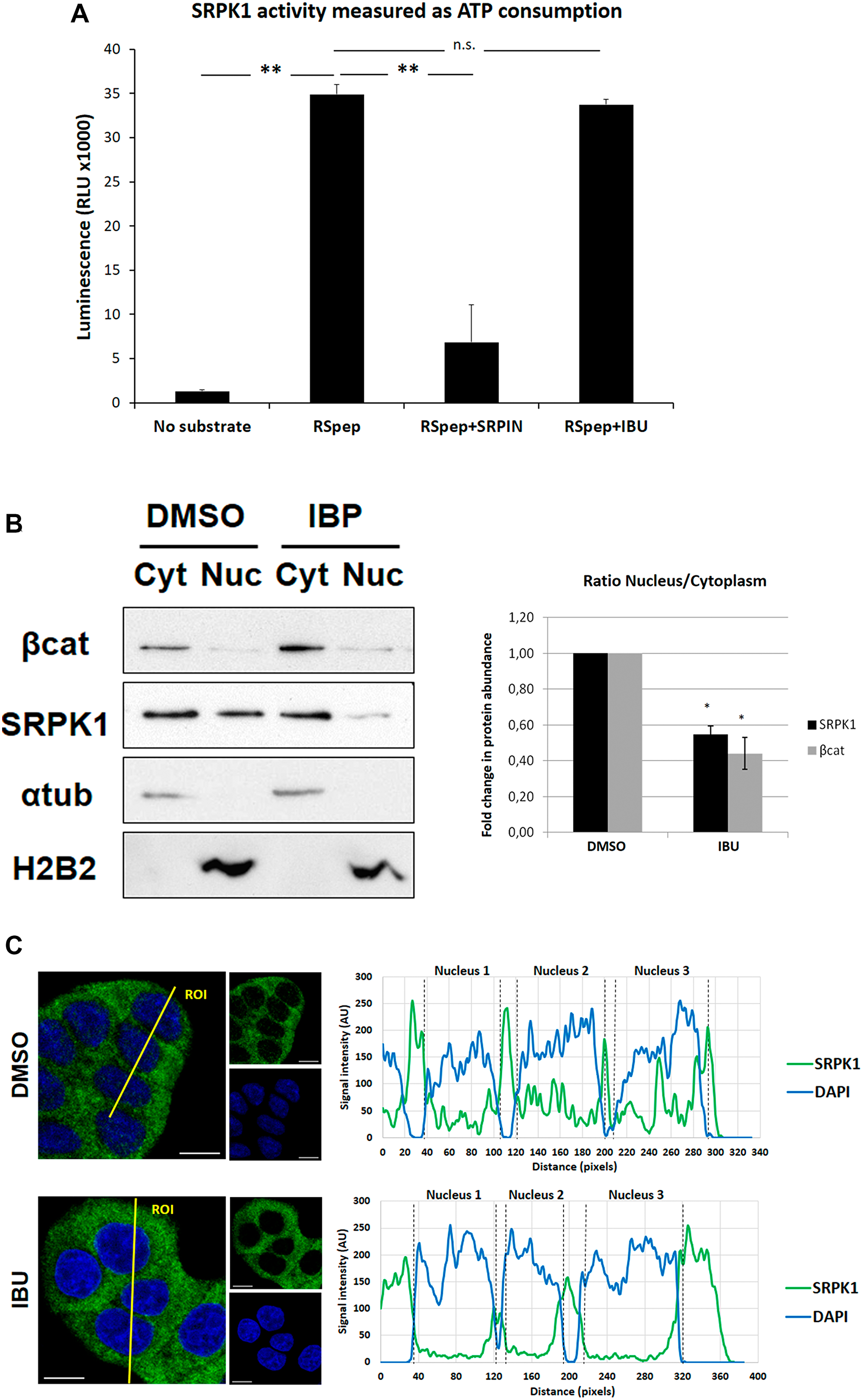 Effect of ibuprofen treatment on SRPK1 catalytic activity and subcellular localization.