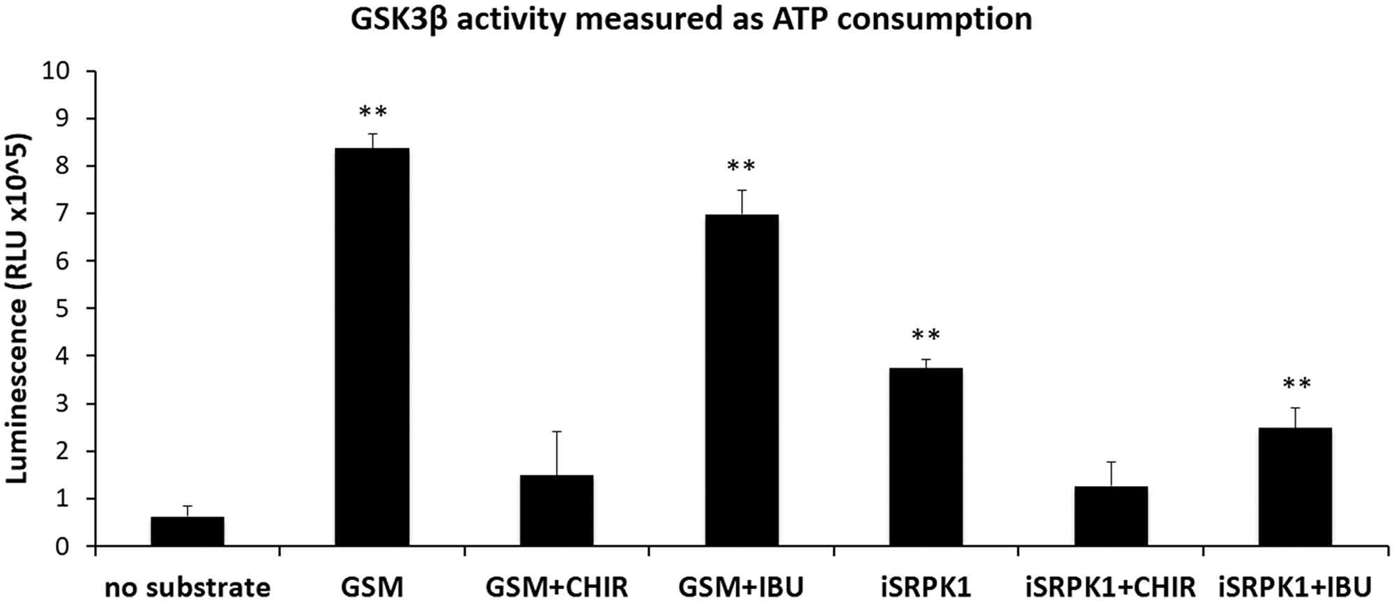 Effect of ibuprofen treatment on GSK3β catalytic activity.