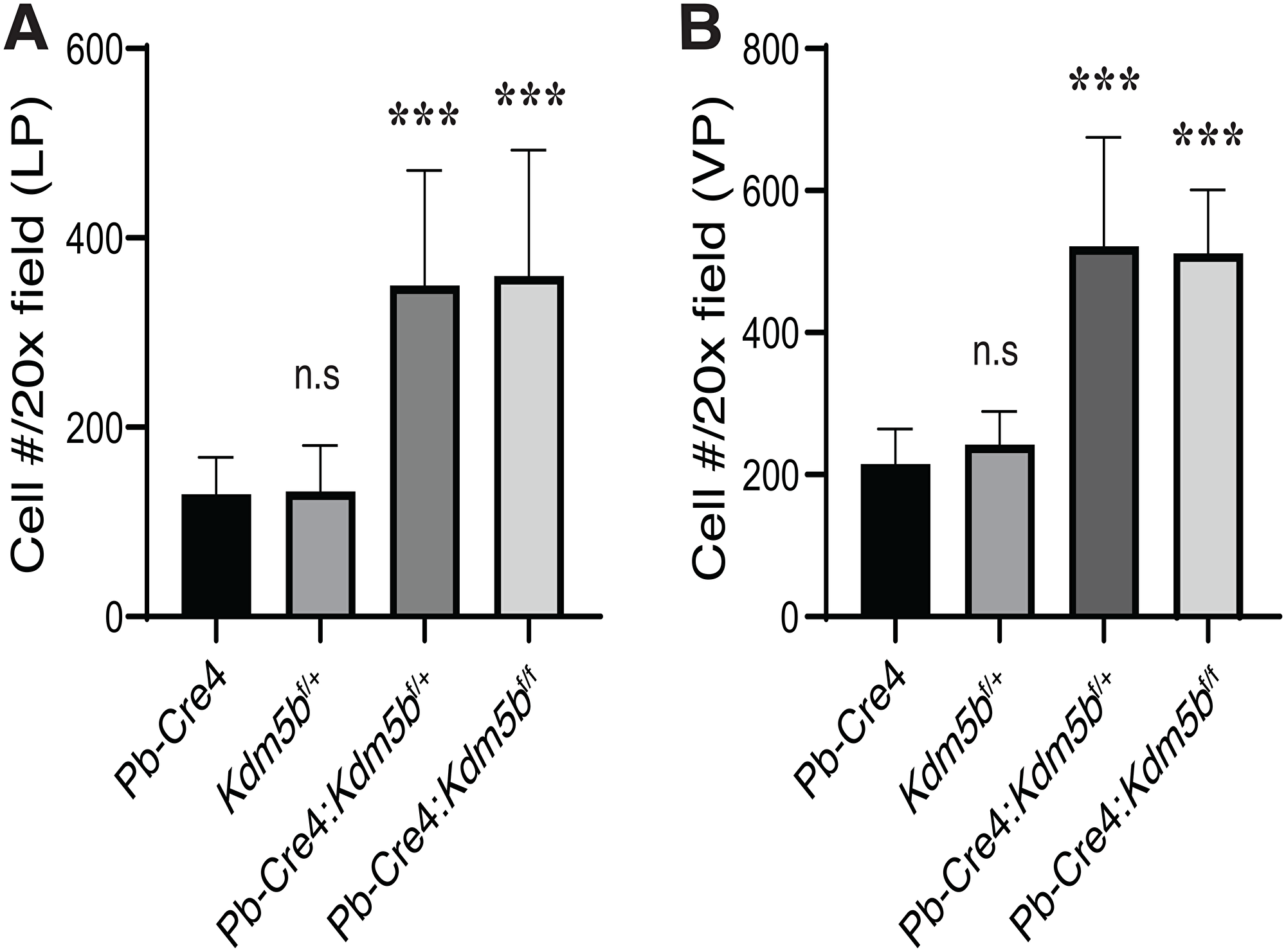 Kdm5b deficiency causes increased cellularity in the mouse prostates.