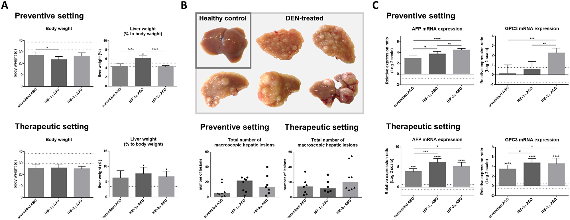 Effect of preventive and therapeutic HIF-1α and HIF-2α ASO treatment on hepatocarcinogenesis in DEN-induced HCC mice.