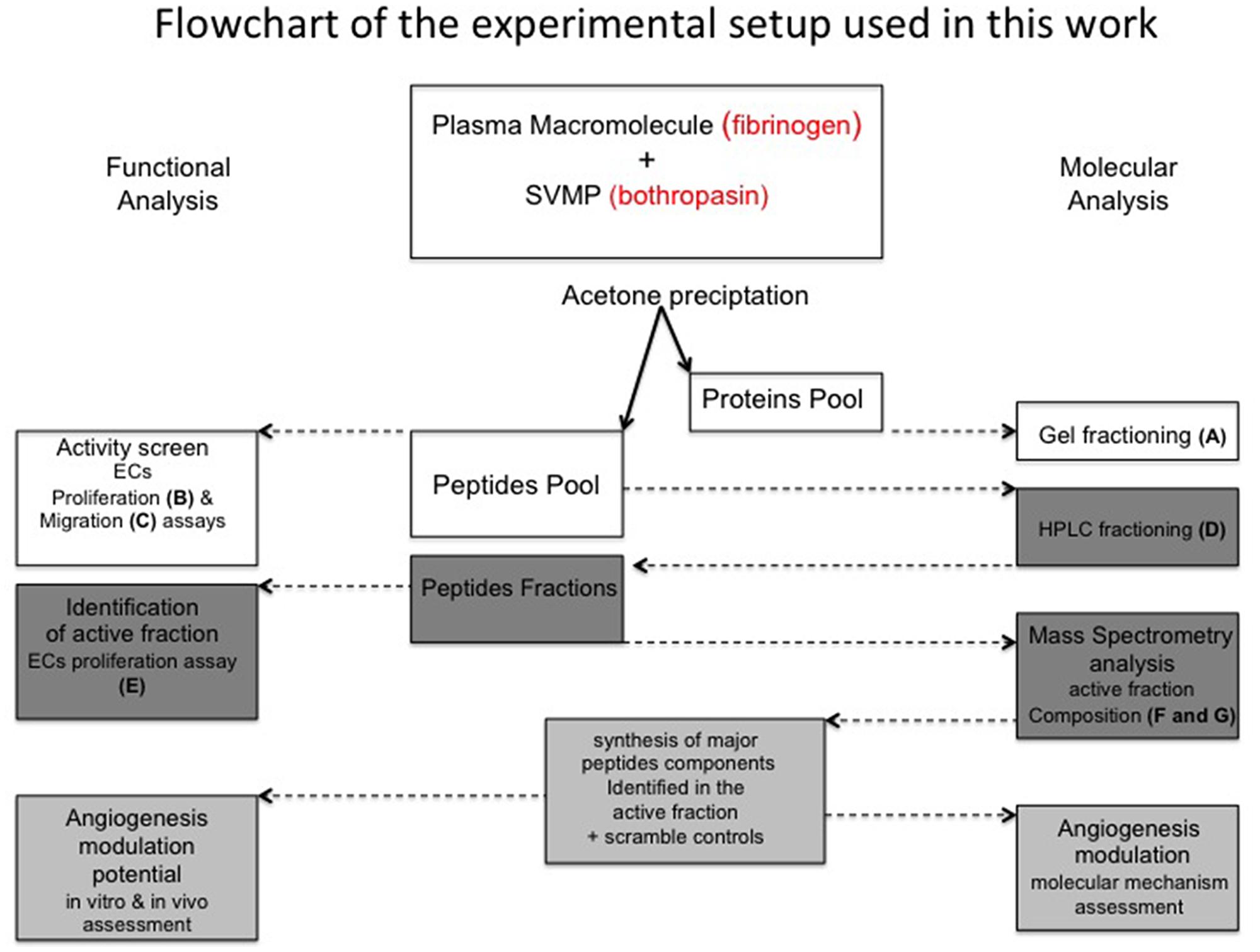 Flowchart of experimental procedures applied in this work.