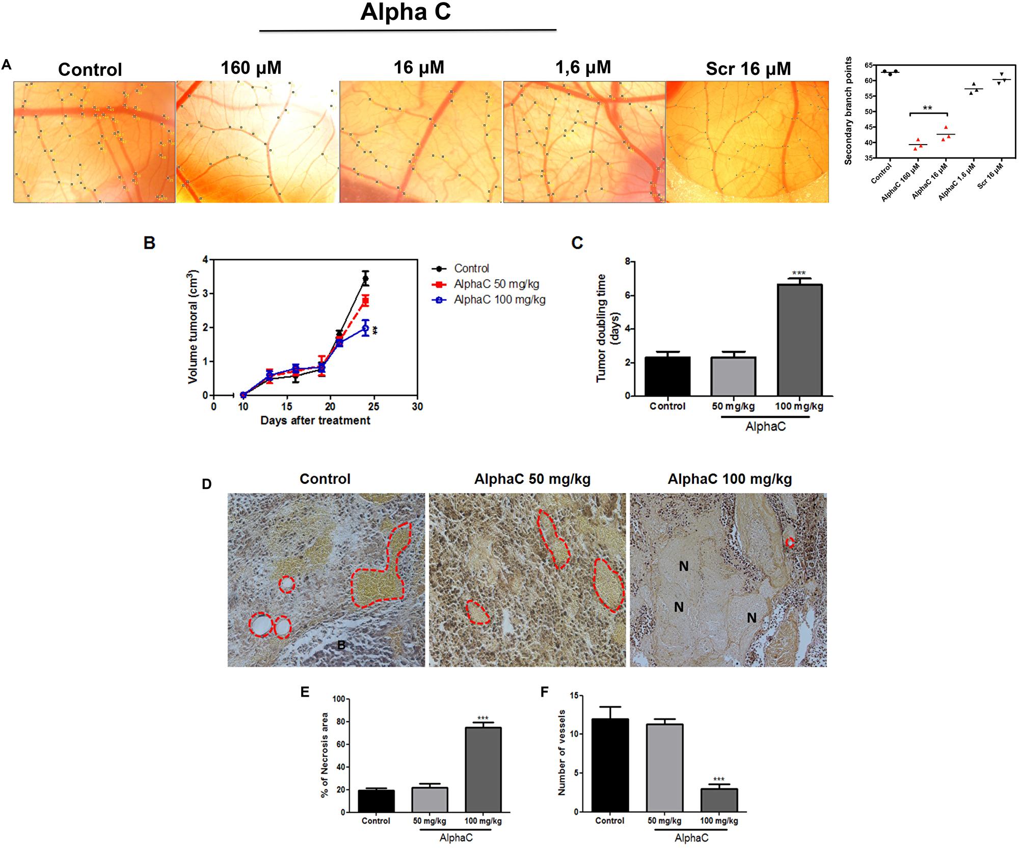 Alphastatin-C inhibits angiogenesis in vivo.