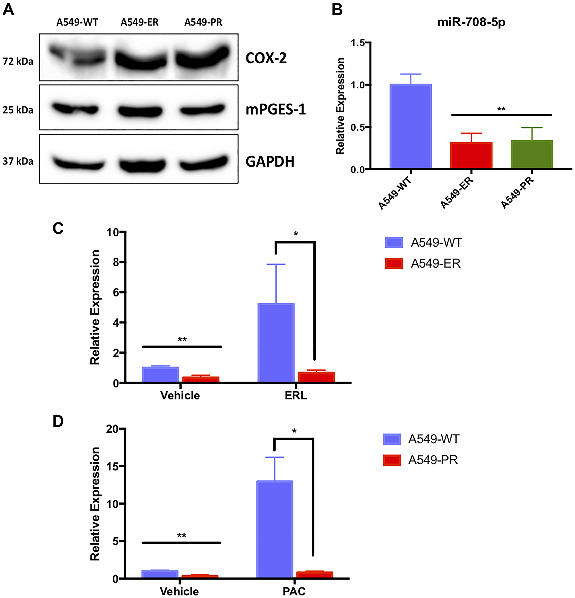 A549-ER and A549-PR cells have altered miR-708-5p and AA pathway expression.