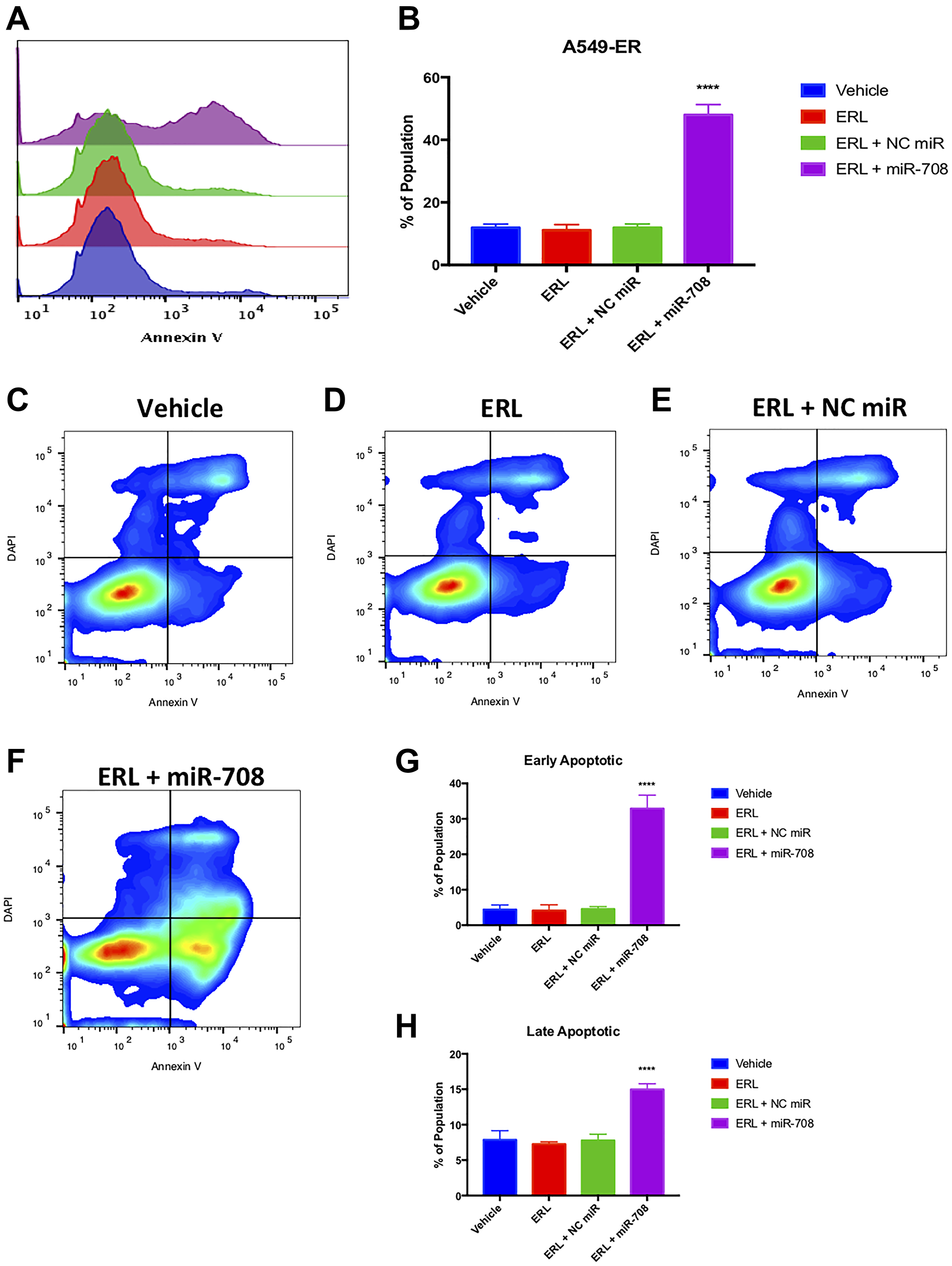 Combinatory miR-708-5p + ERL treatment induces apoptosis in A549-ER cells.