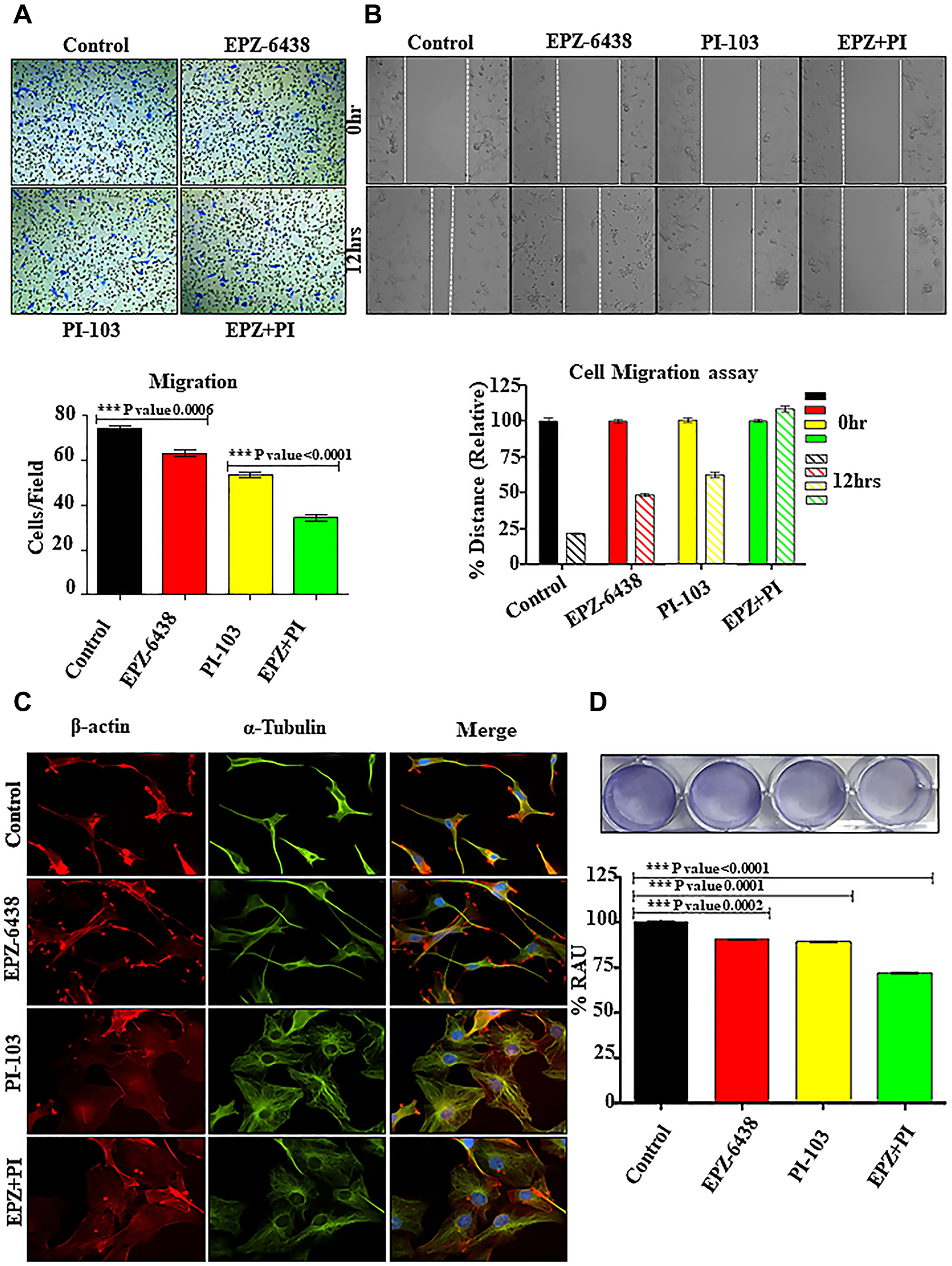 EPZ-6438 and PI-103 hinders the cellular migration of GBM U-87 cells.