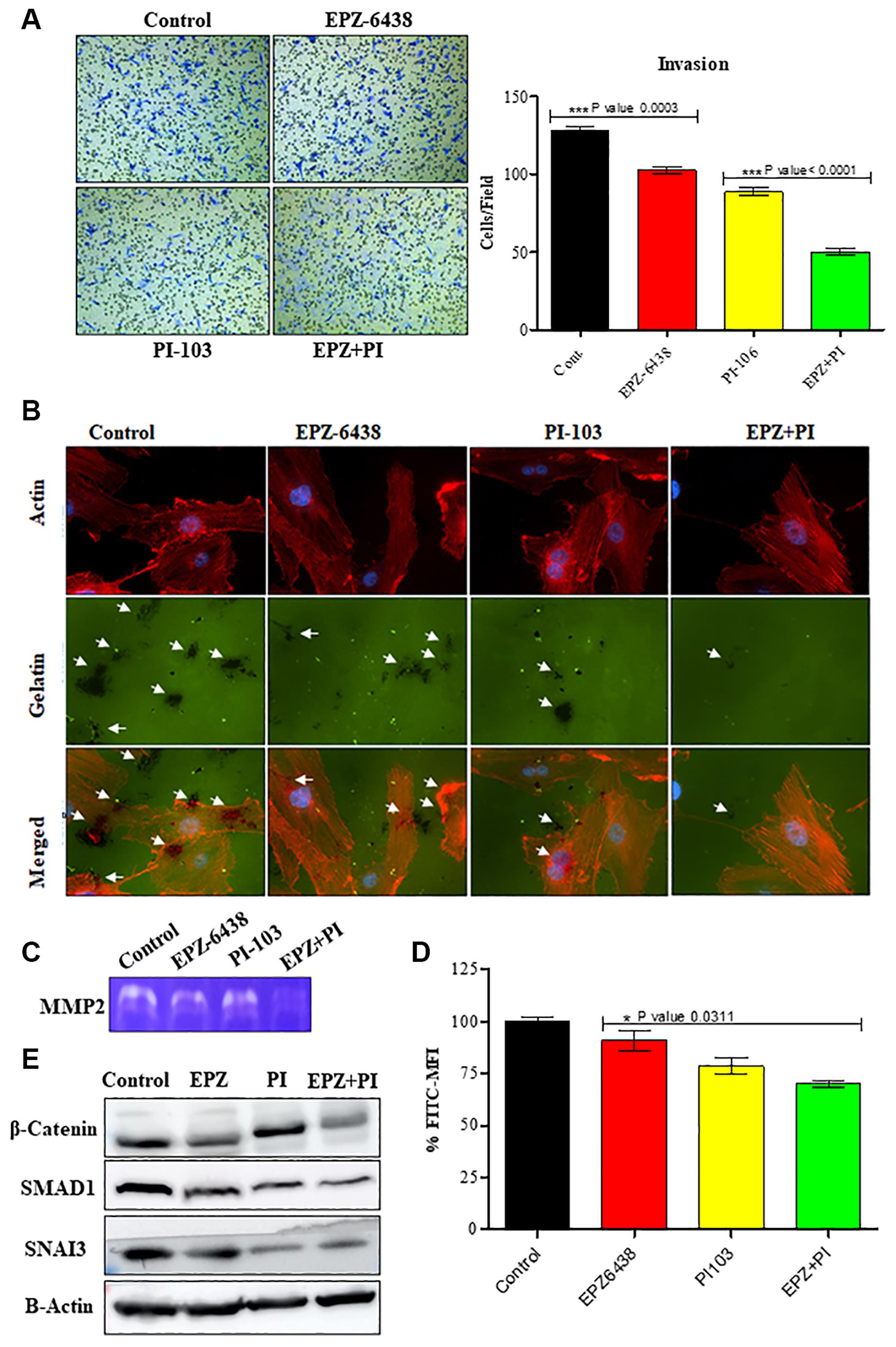 EPZ-6438 and PI-103 reduces the invasive behavior of GBM U-87 cells.