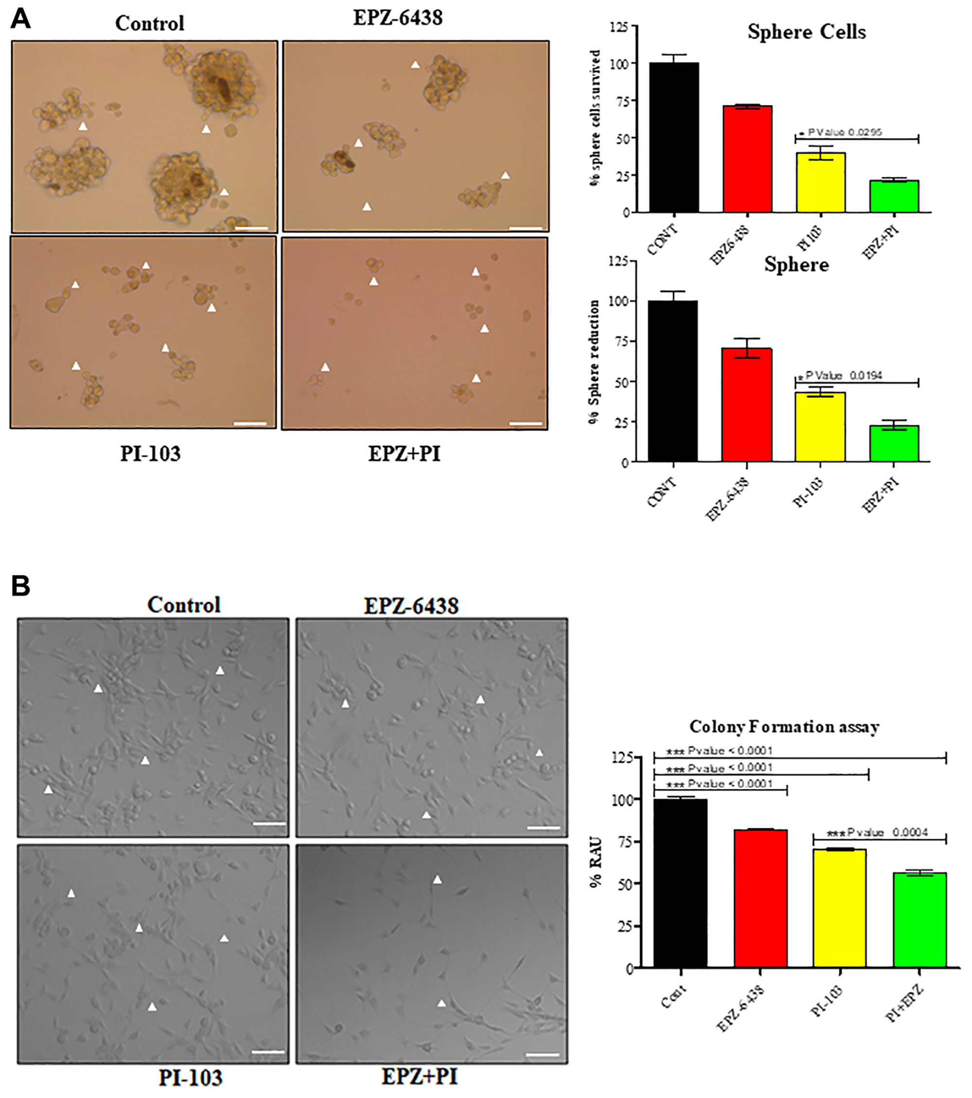 EPZ-6438 and PI-103 combination affect the stemness properties of GBM U-87 cells.