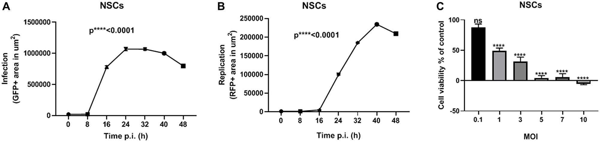 NSCs are permissive to vMyx-GFP-TdTr infection.