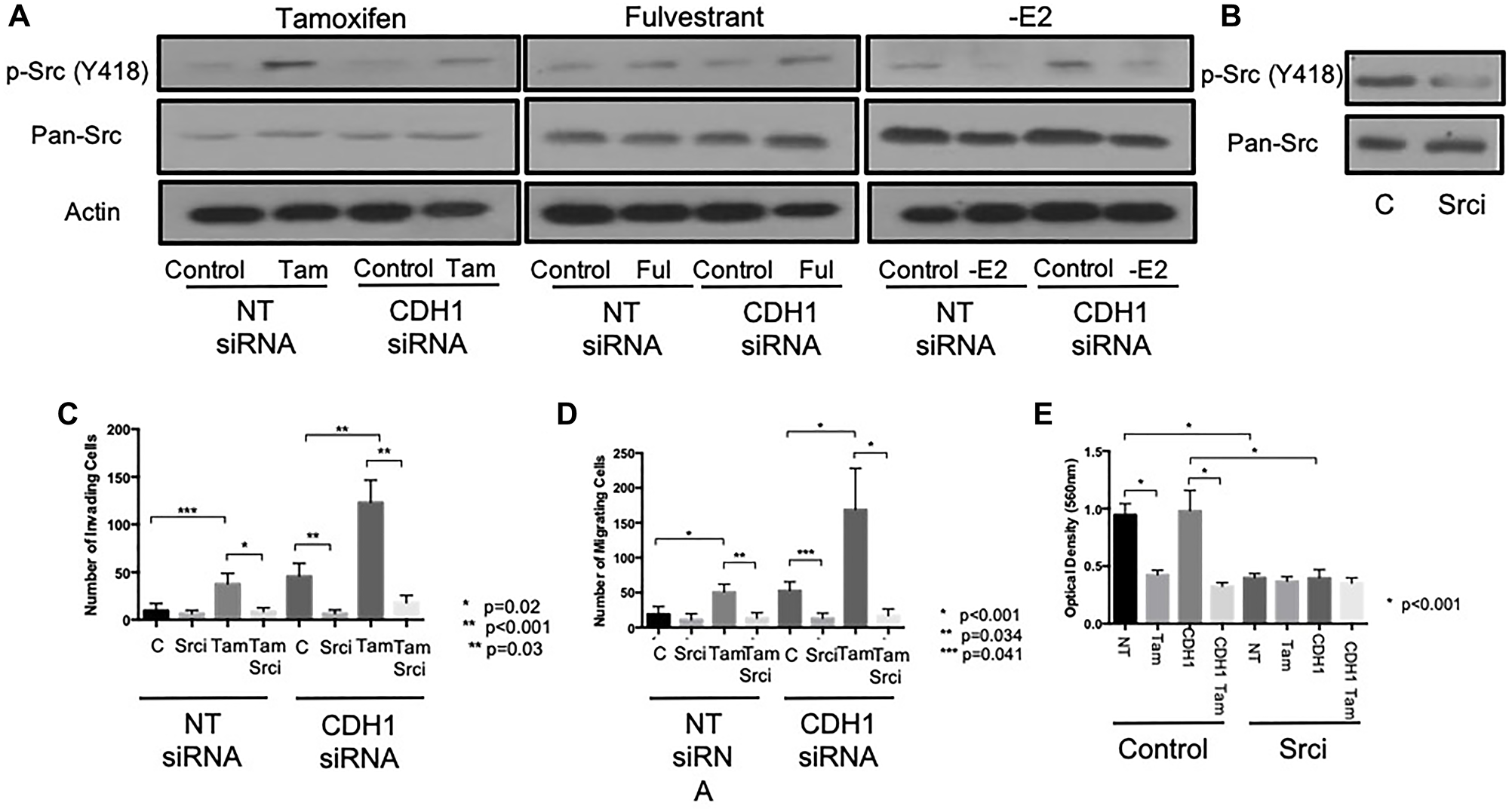 Tamoxifen and fulvestrant promote invasion of ER+ breast cancer cells through Src kinase.
