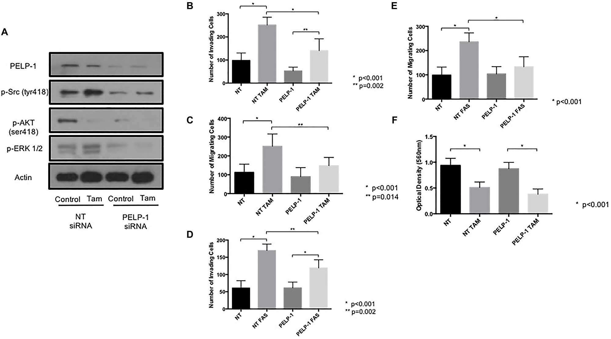 PELP1 siRNA prevents tamoxifen and fulvestrant-induced pro-invasive responses in ER+ breast cancer cells.