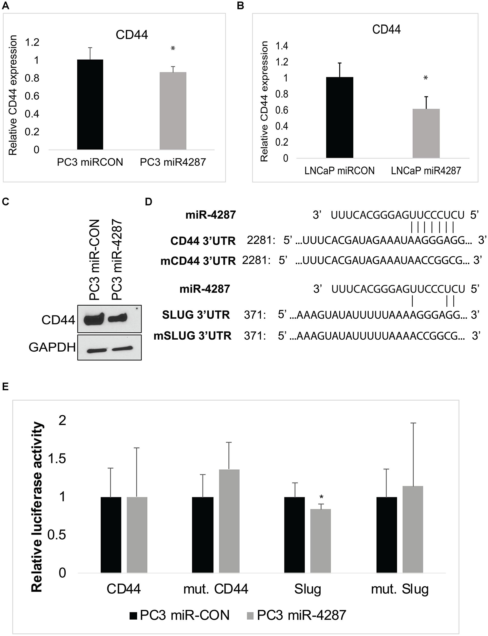miR-4287 directly regulates stem cell marker CD44 and EMT mediator SLUG.