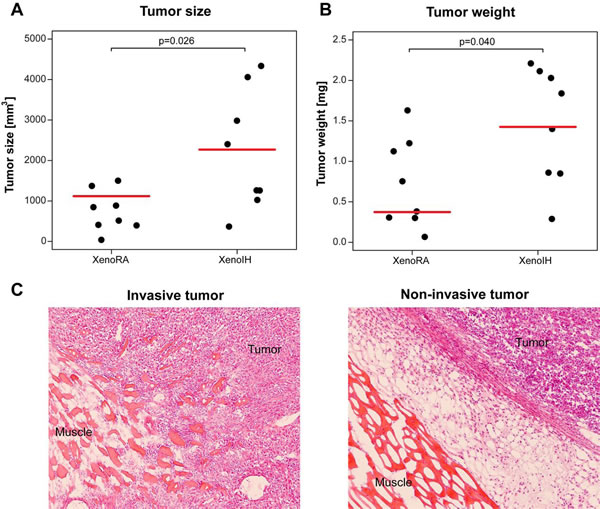 Effects of IH exposure on xenografted tumors.
