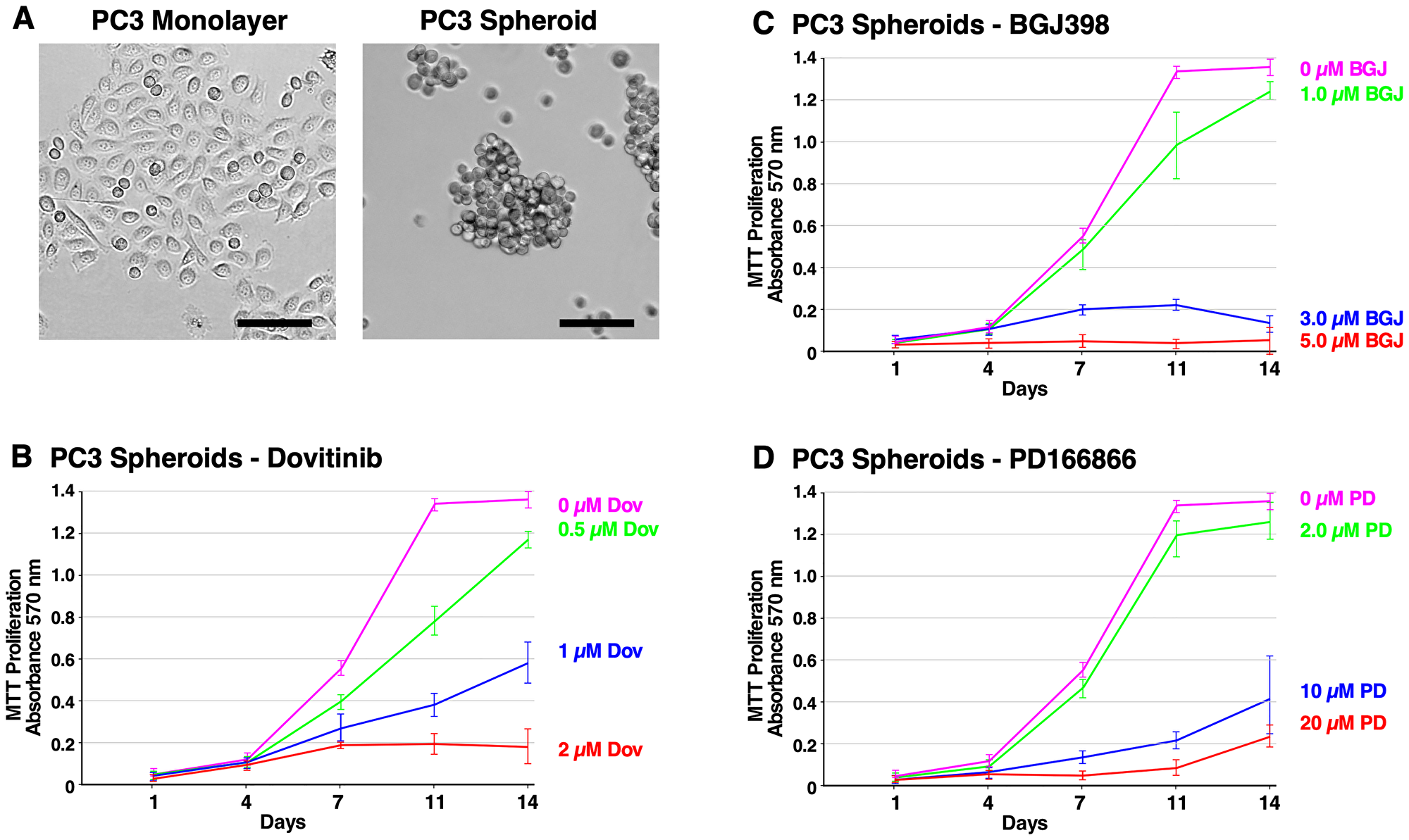 Formation of PC3 spheroids and inhibition of survival and growth via TKI treatment.