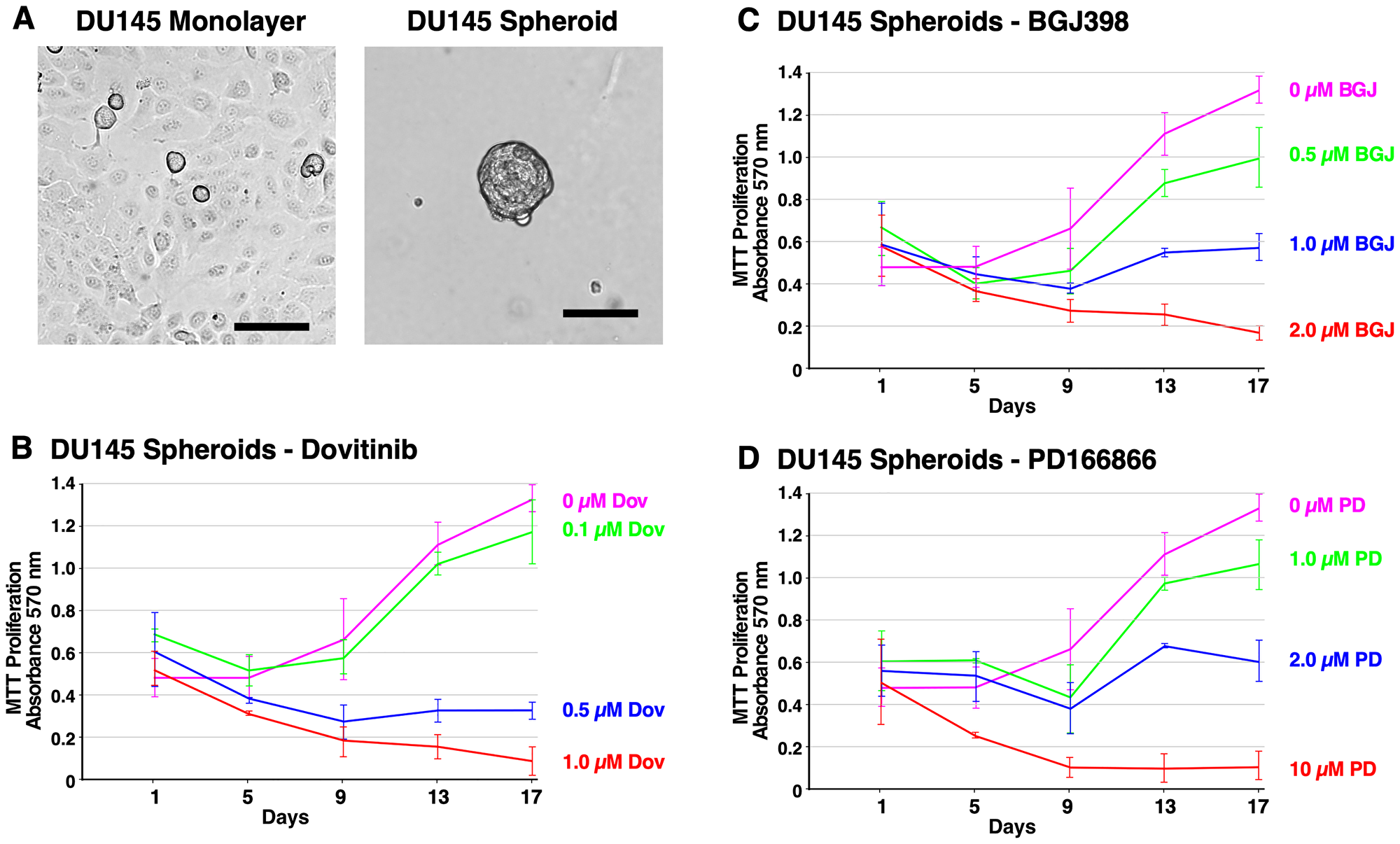 Formation of DU145 spheroids and inhibition of survival and growth via TKI treatment.