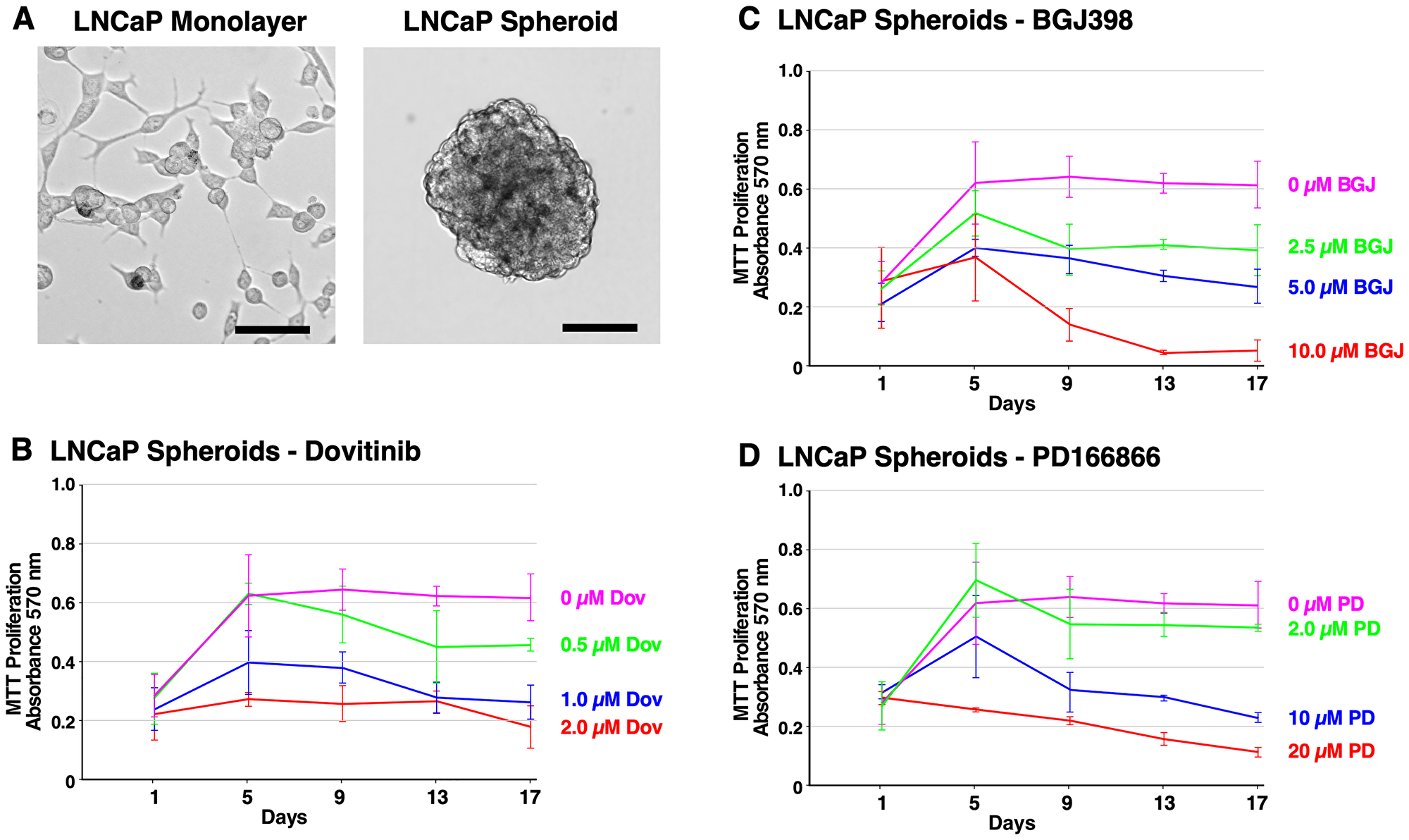 Formation of LNCaP spheroids and inhibition of survival and growth via TKI treatment.