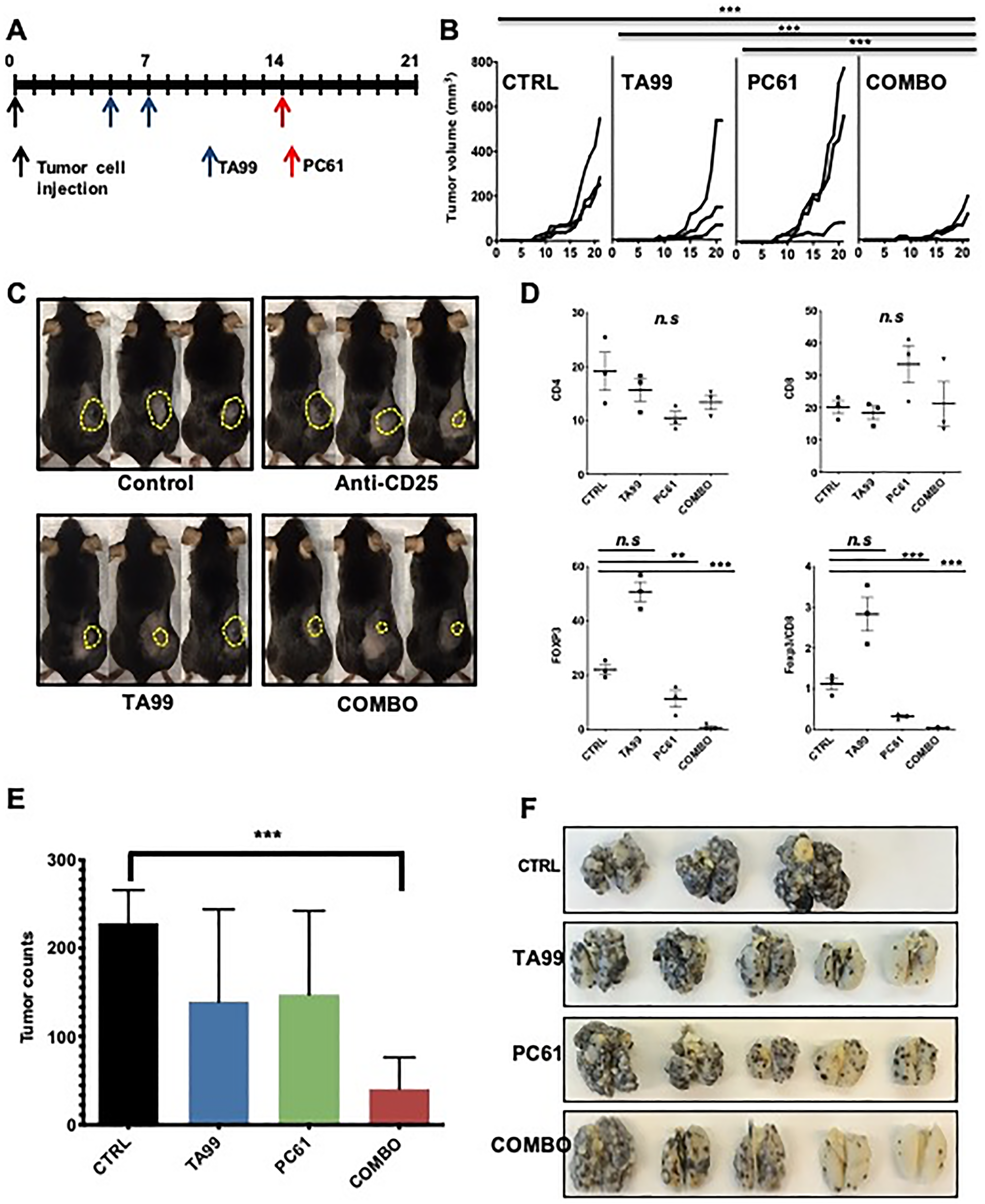Depletion of Treg cells increased the anti-melanoma effects of TA99 mAb.