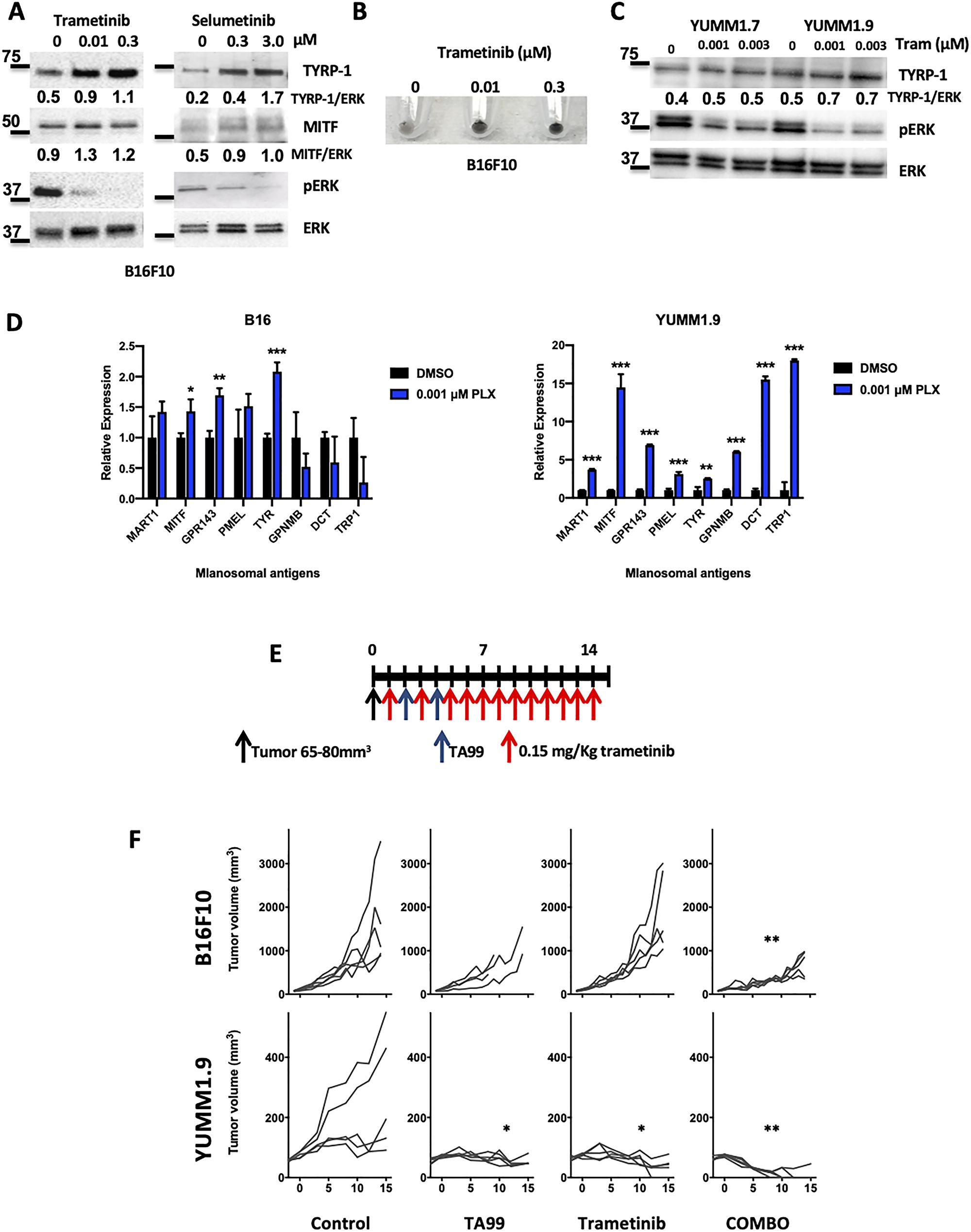MEK inhibition enhances the anti-tumor effect with TA99 mAb.