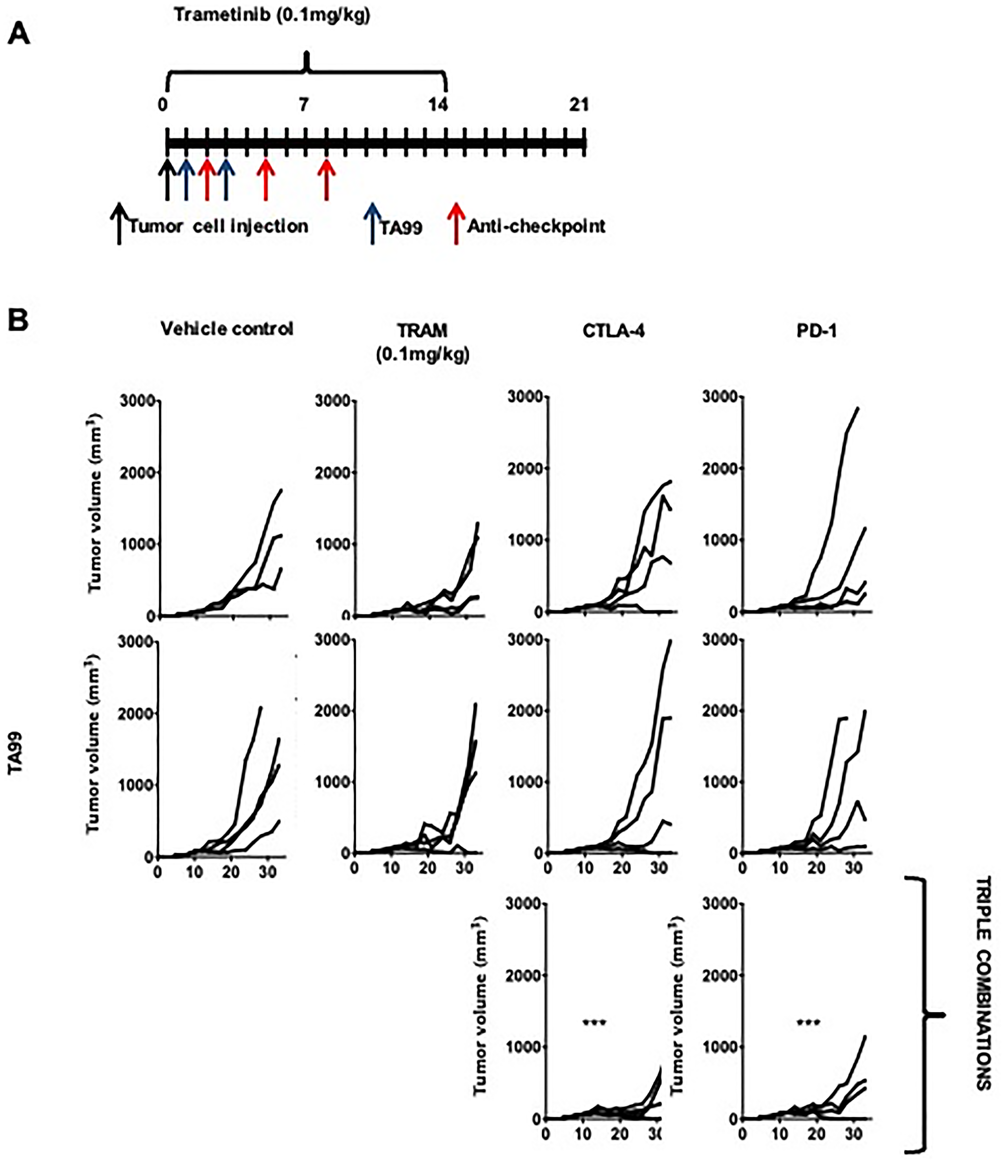 TA99 anti-tumor antibodies improved the outcome of treatment with combined targeted therapy and ICB in BRAFV600E-mutant subcutaneous YUMM melanoma.