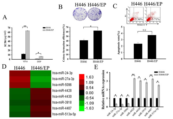 Differential miRNA expression profile of VP16–DDP-sensitive and -resistant H446 cells.