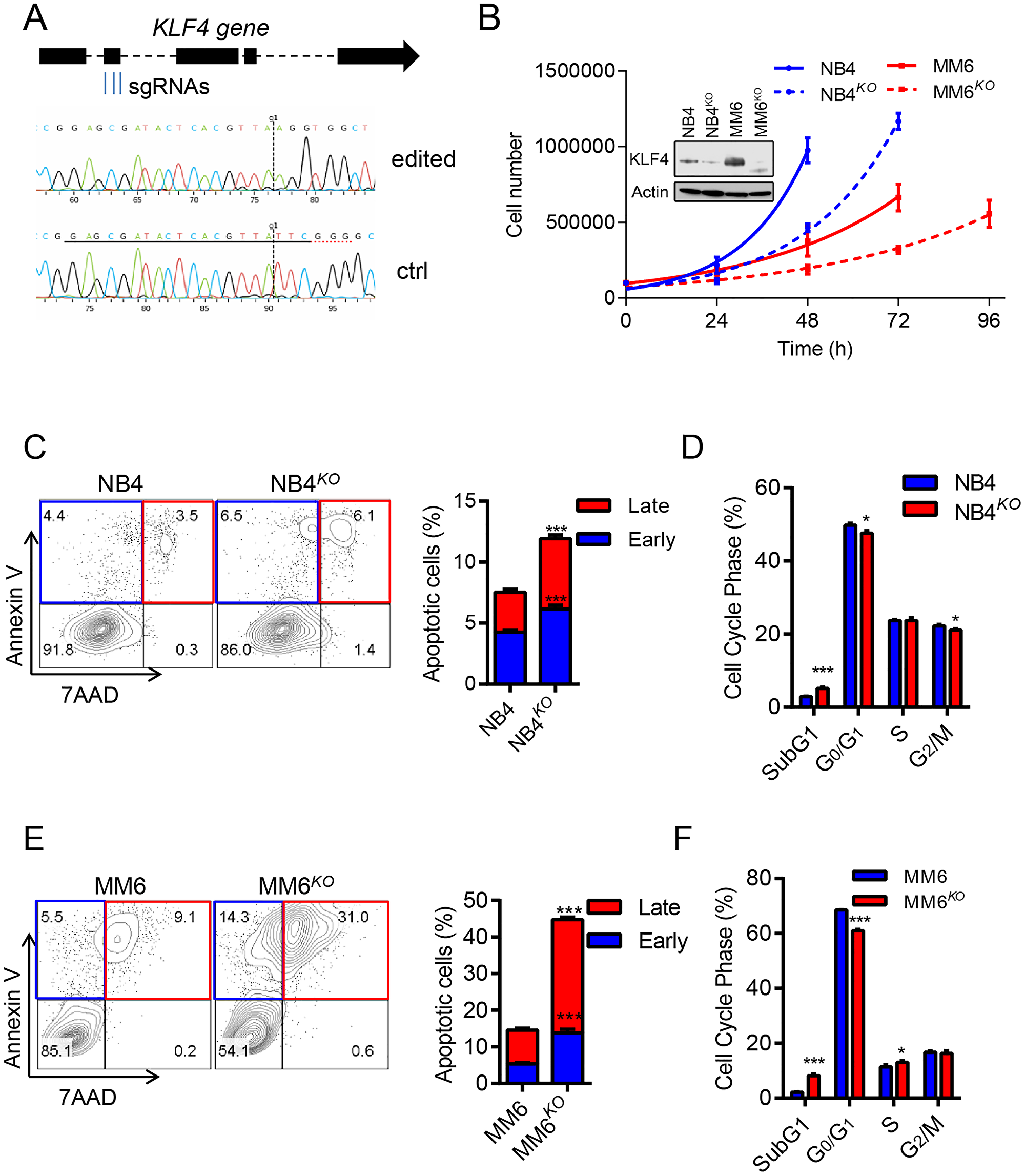 KLF4 deletion inhibits cell growth and induces apoptosis.