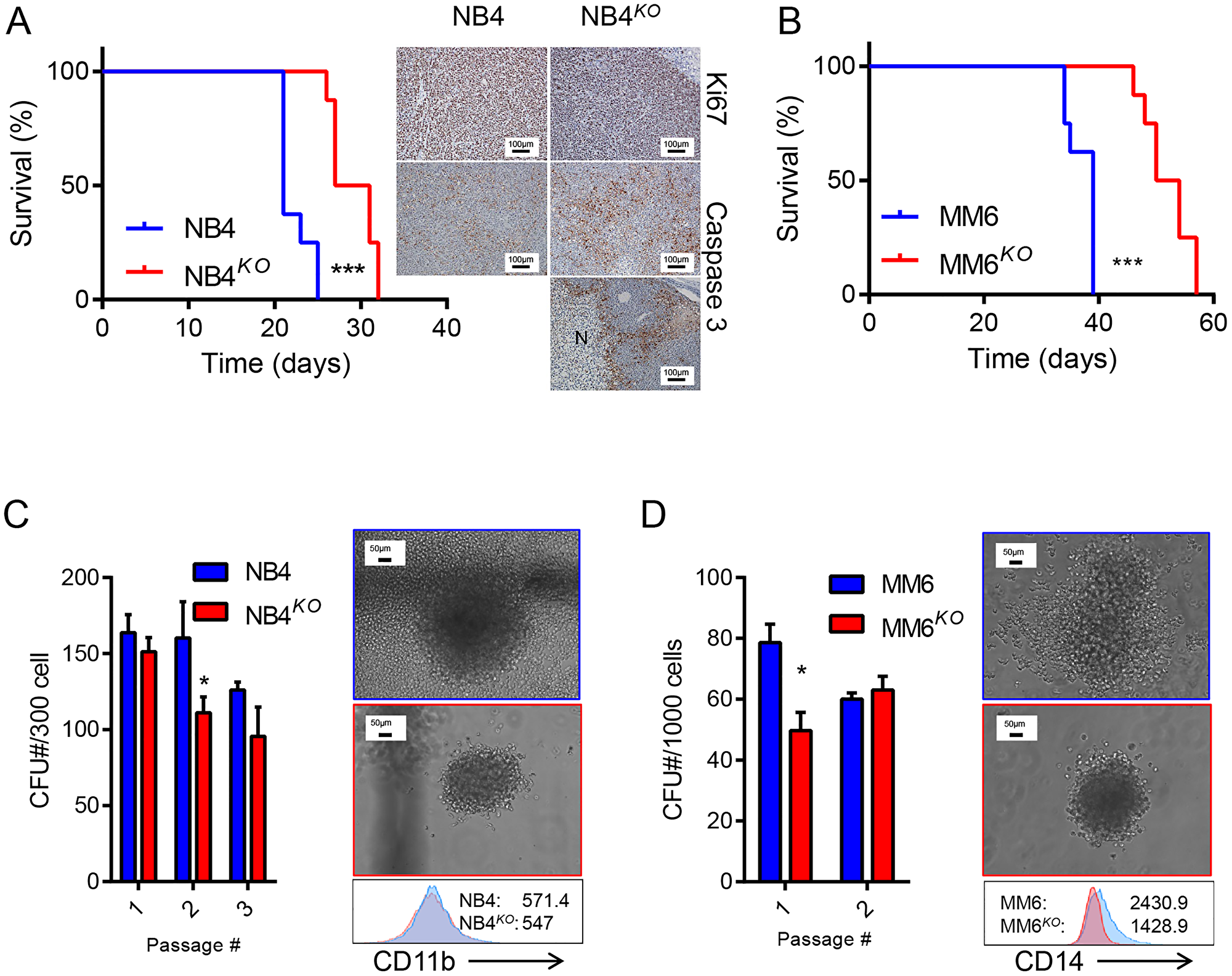Loss of KLF4 reduces leukemia burden in a cell-based xenograft model.