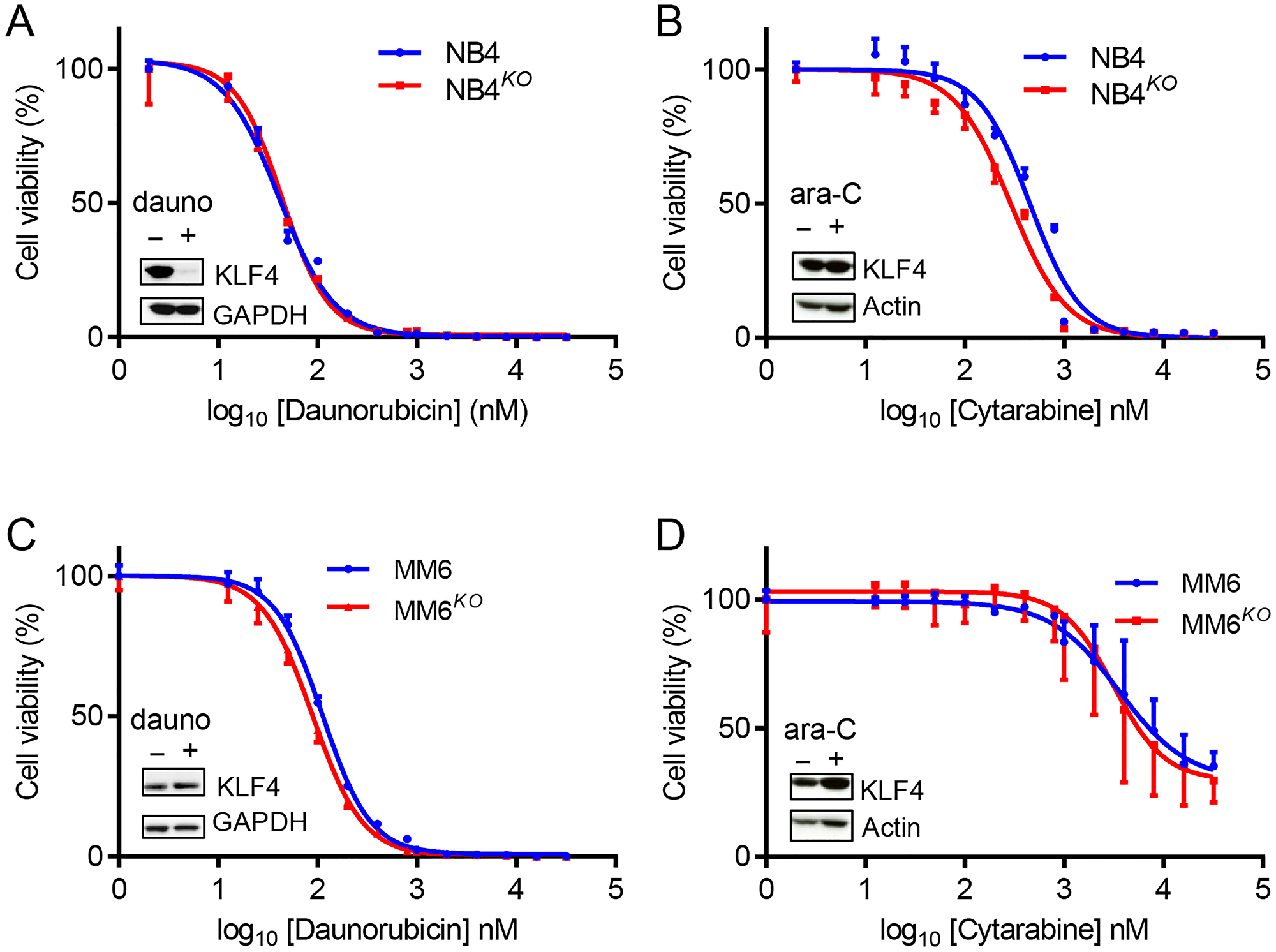 KLF4 deletion does not alter sensitivity to standard chemotherapeutic drugs.