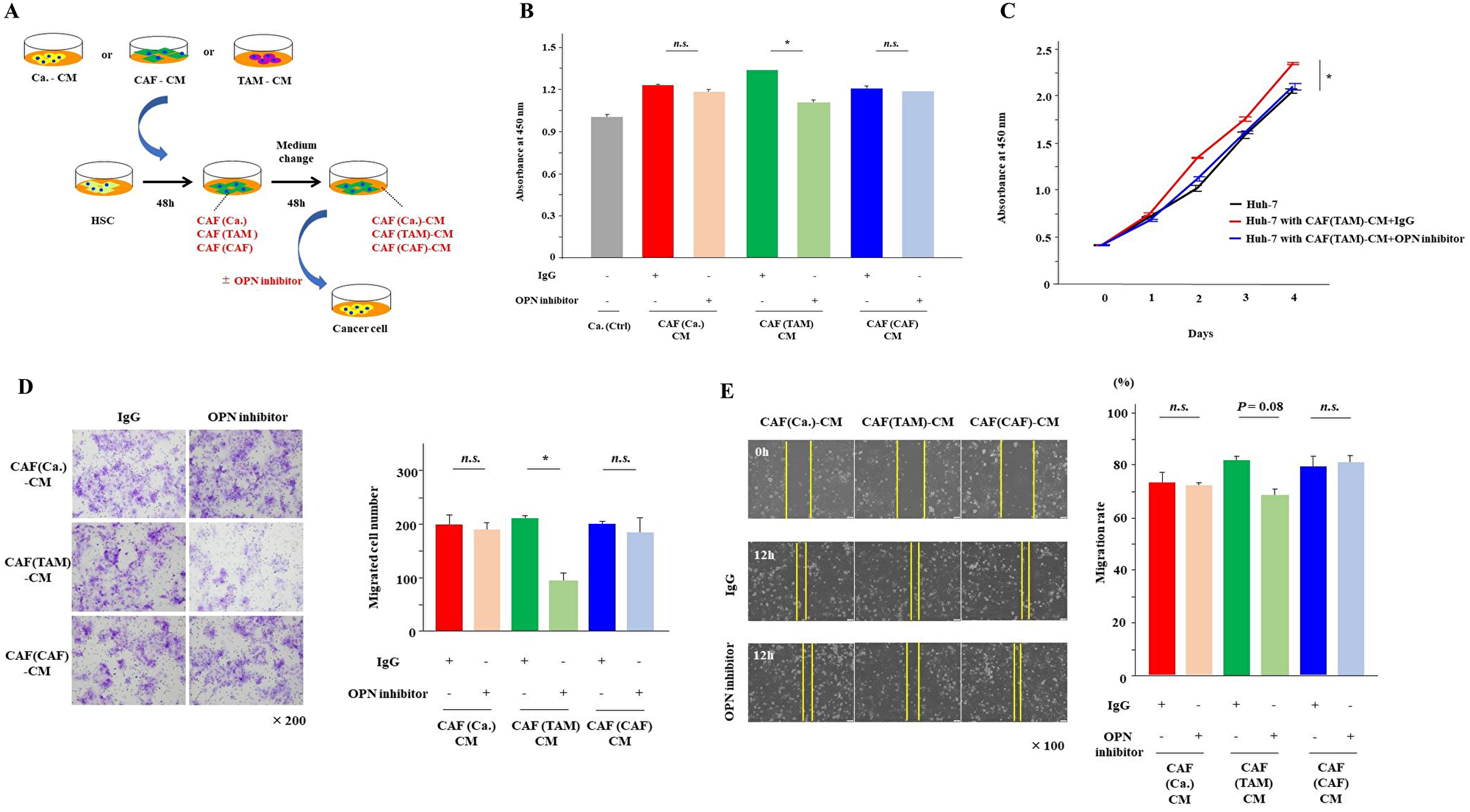 Inhibition of OPN suppressed cancer proliferation, invasion and migration.