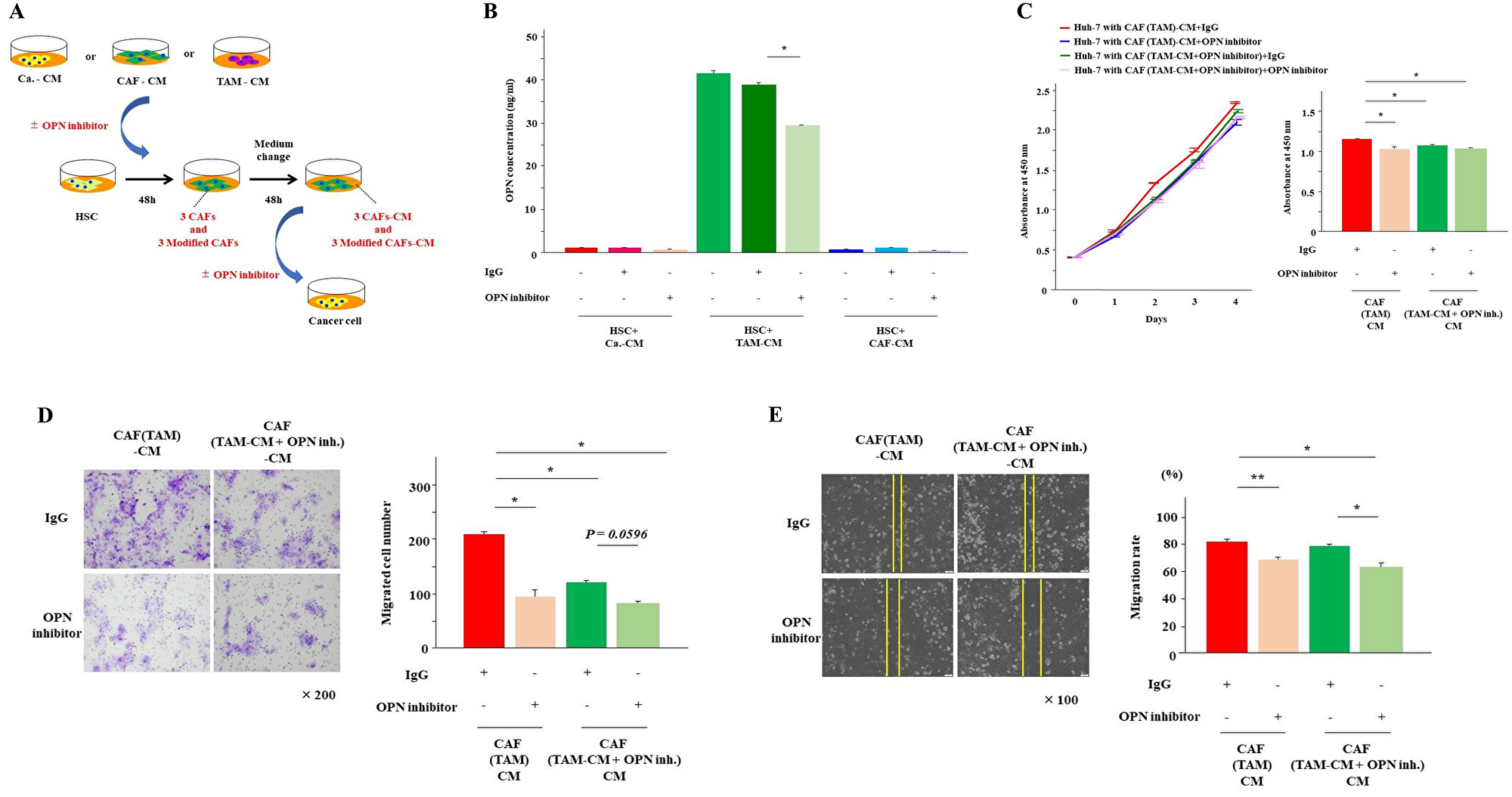OPN inhibition reduced OPN secretion from CAFs (TAM).