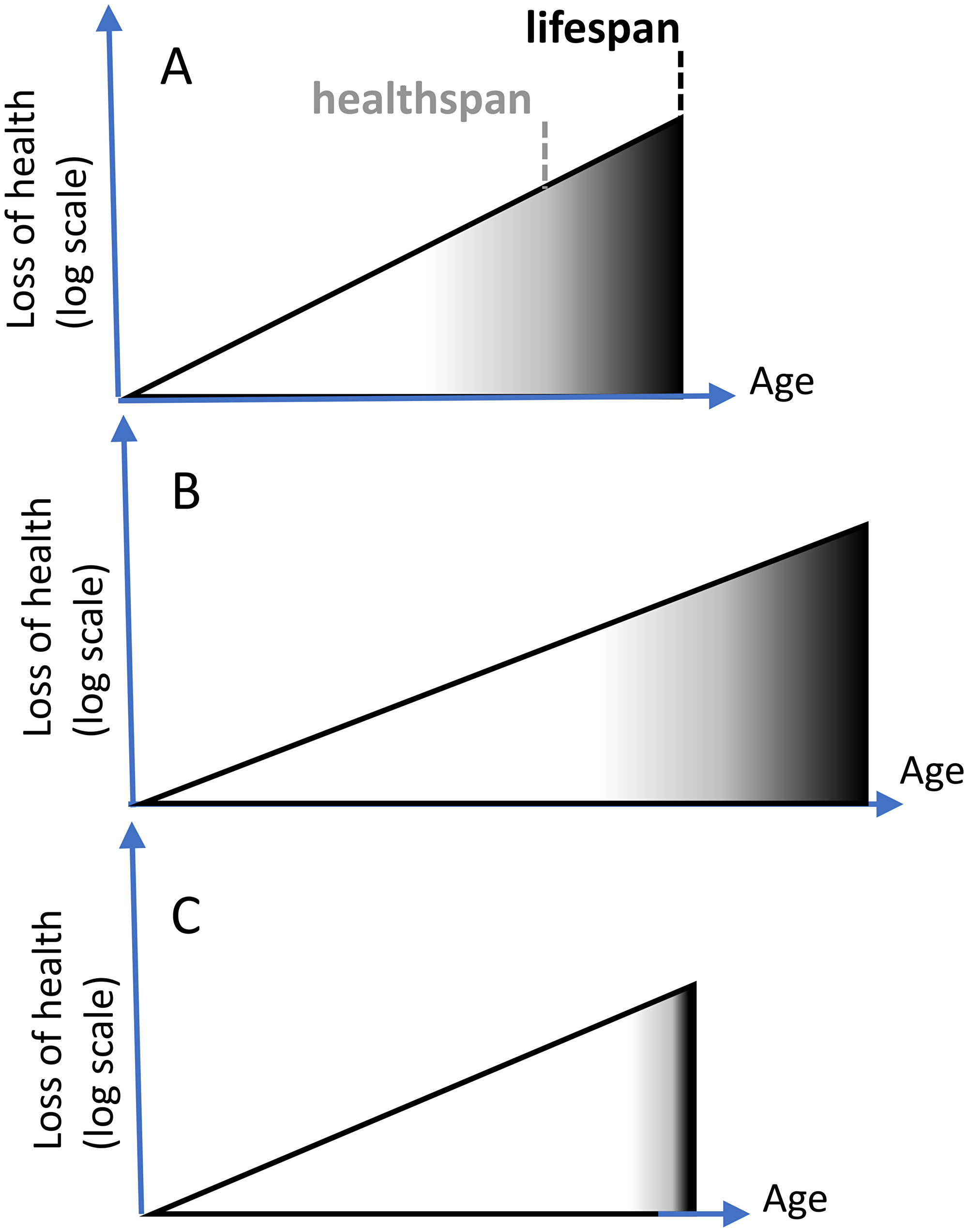 Extension of healthspan extends lifespan.