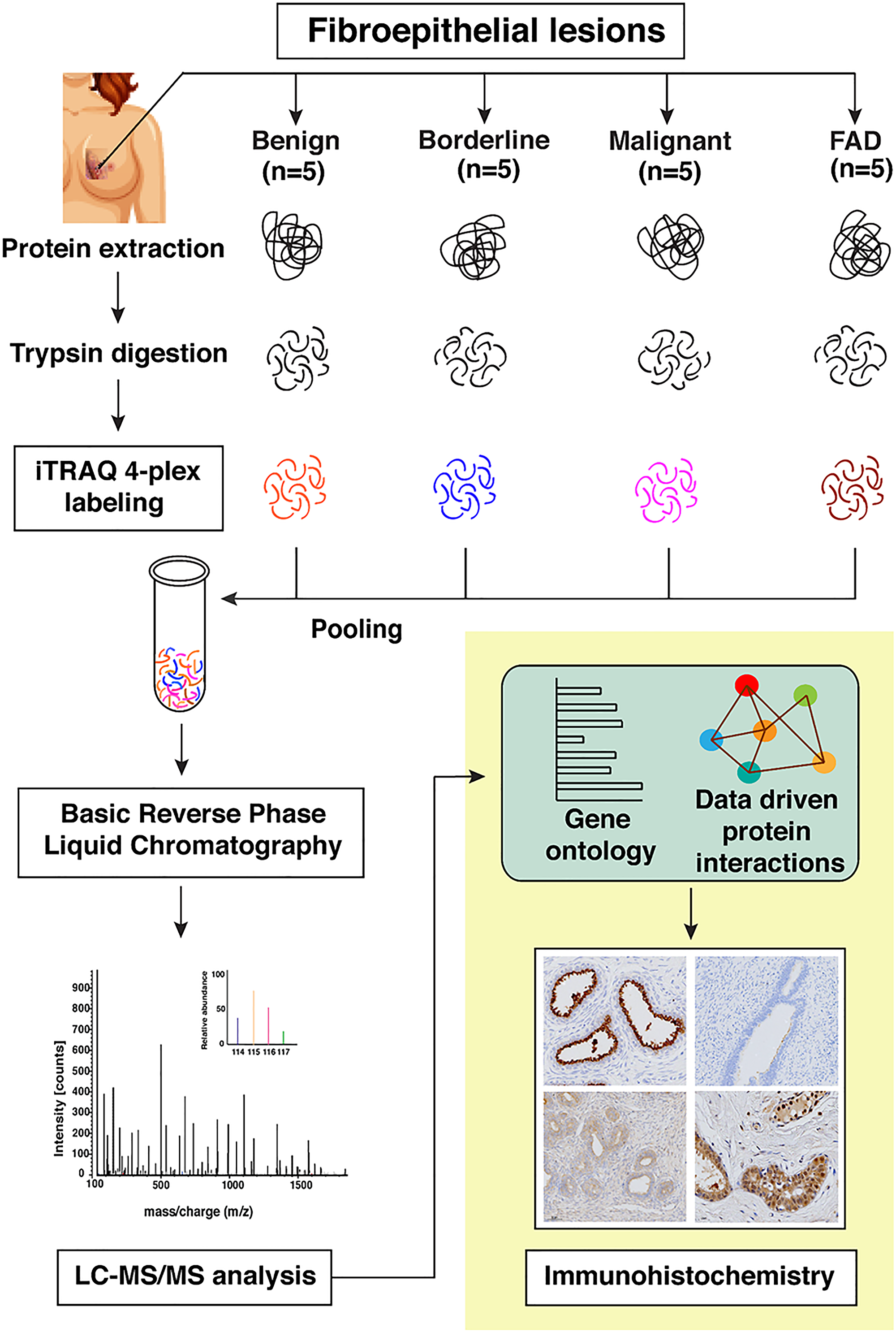 Schematic workflow for the identification of differentially expressed proteins across FELs using iTRAQ based quantitative proteomics approach.