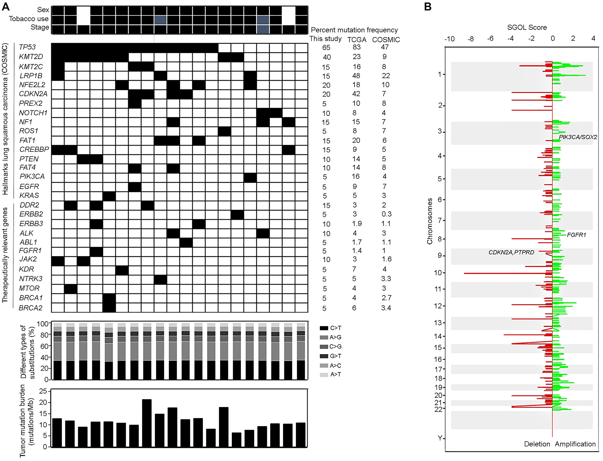 Somatic mutations and copy number variations observed in lung squamous carcinoma patients.